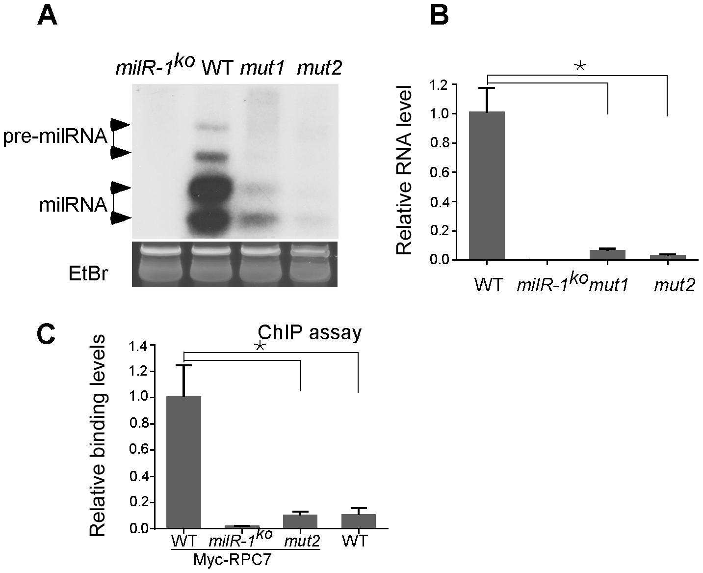 <i>milR-1</i> transcription is mediated by a non-conventional Pol III promoter.