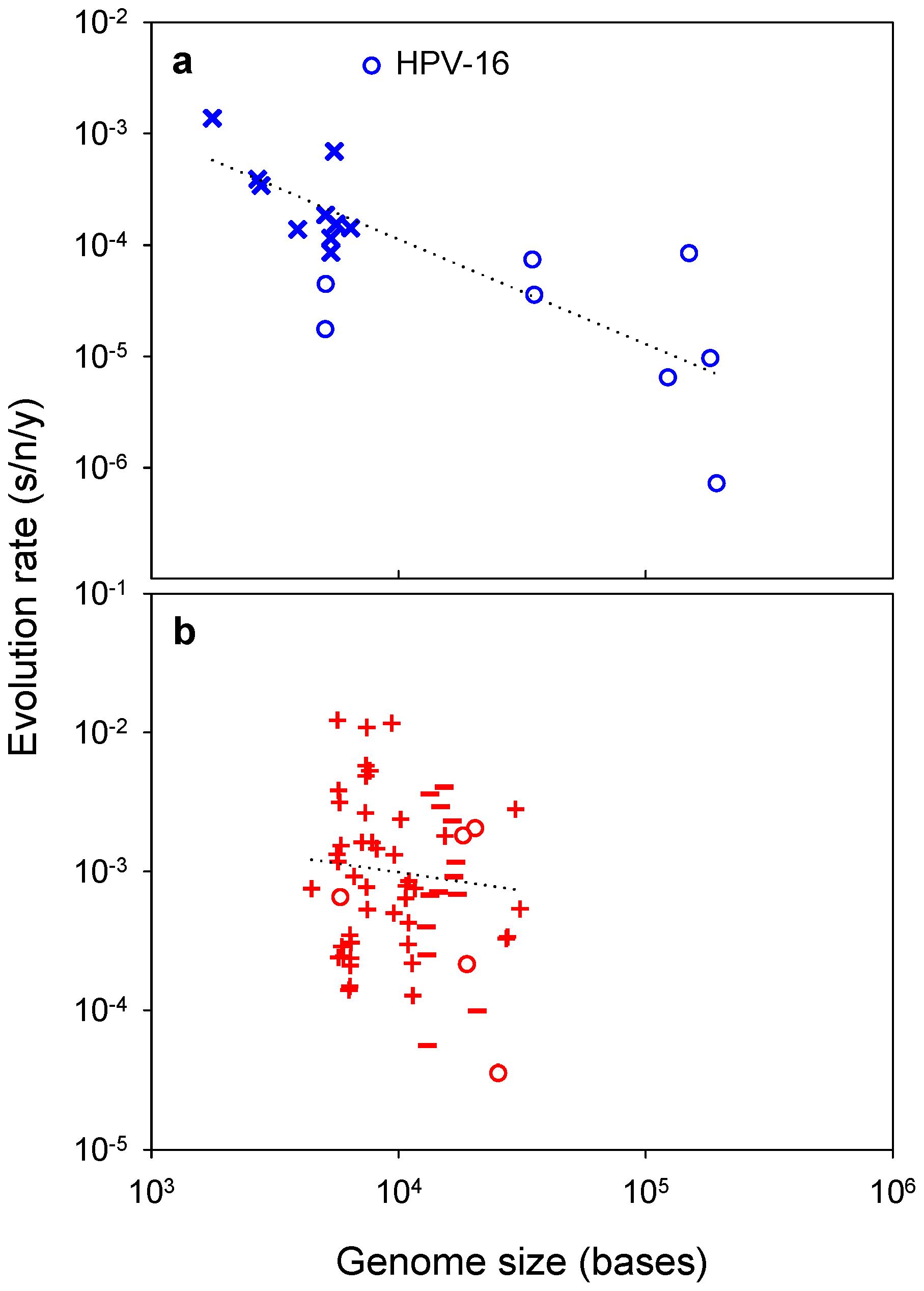 Viral evolution rate versus genome size.