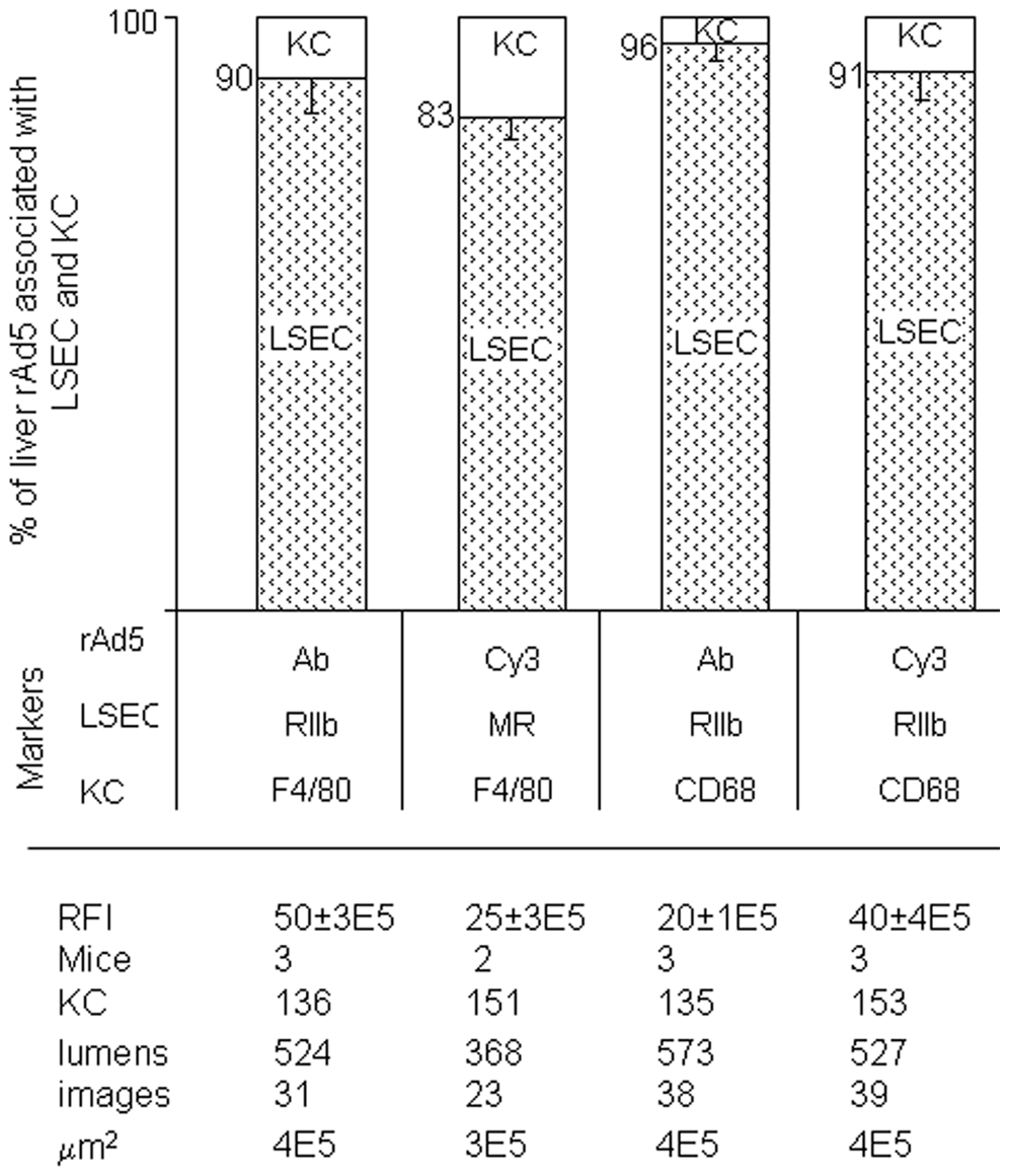 Quantification of rAd5 association with LSEC and KC.