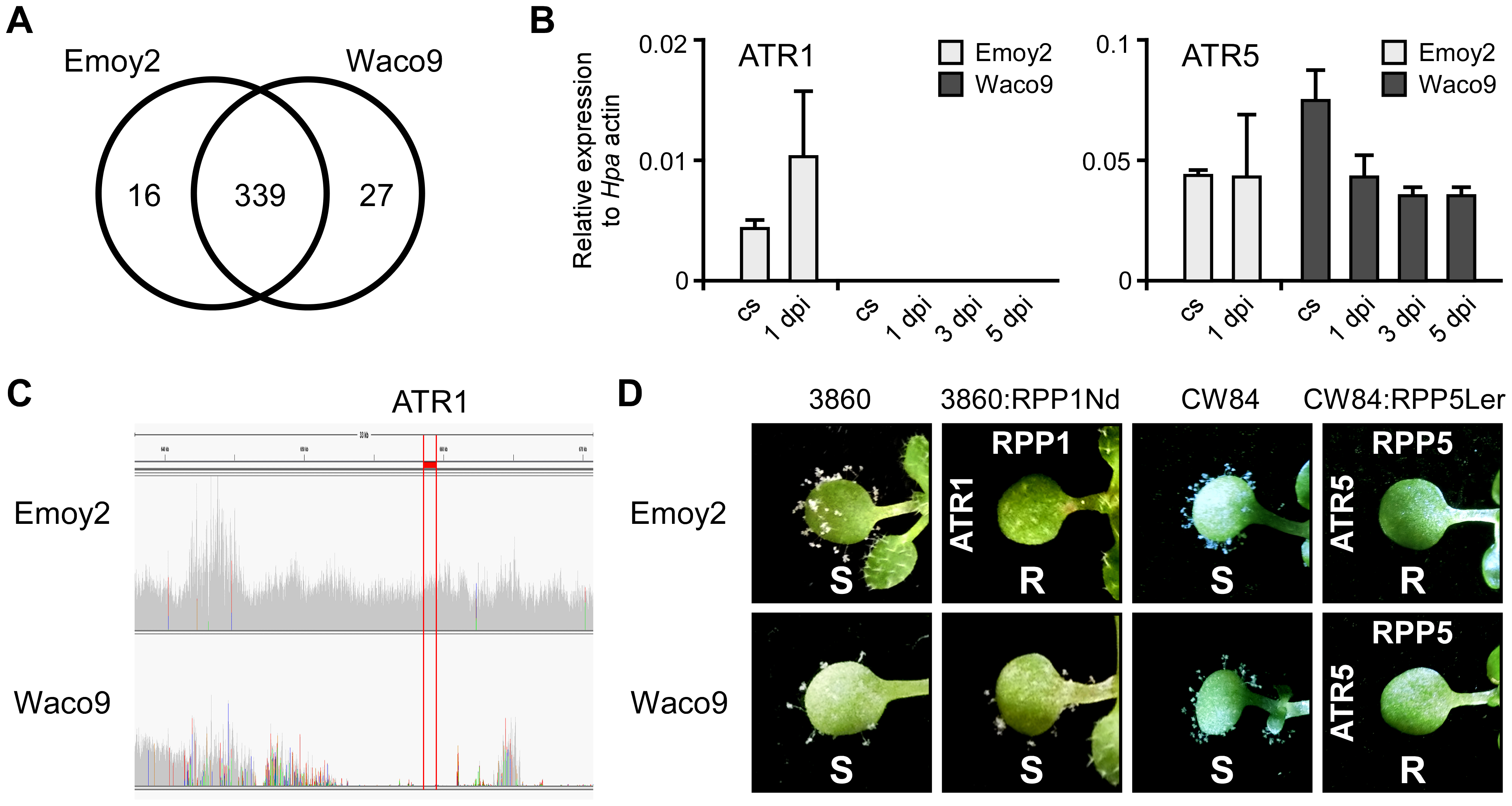 <i>Hpa</i> Waco9 overcomes recognition by RPP4, but not RPP5.
