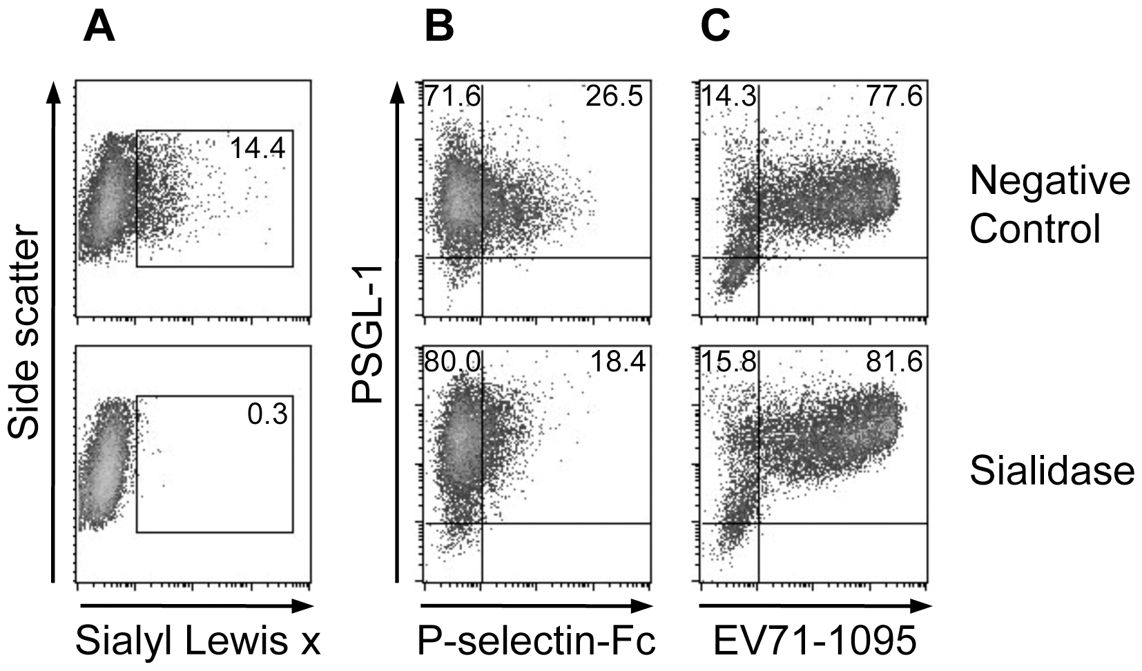 Effect of sialidase treatment on PSGL-1 binding to EV71-1095.