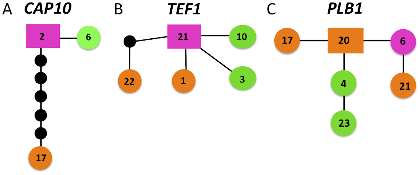 Haplotype mapping of markers harboring shared alleles between VGIIIa and VGIIIb shows evidence for both ancestral origins and introgression of shared alleles.