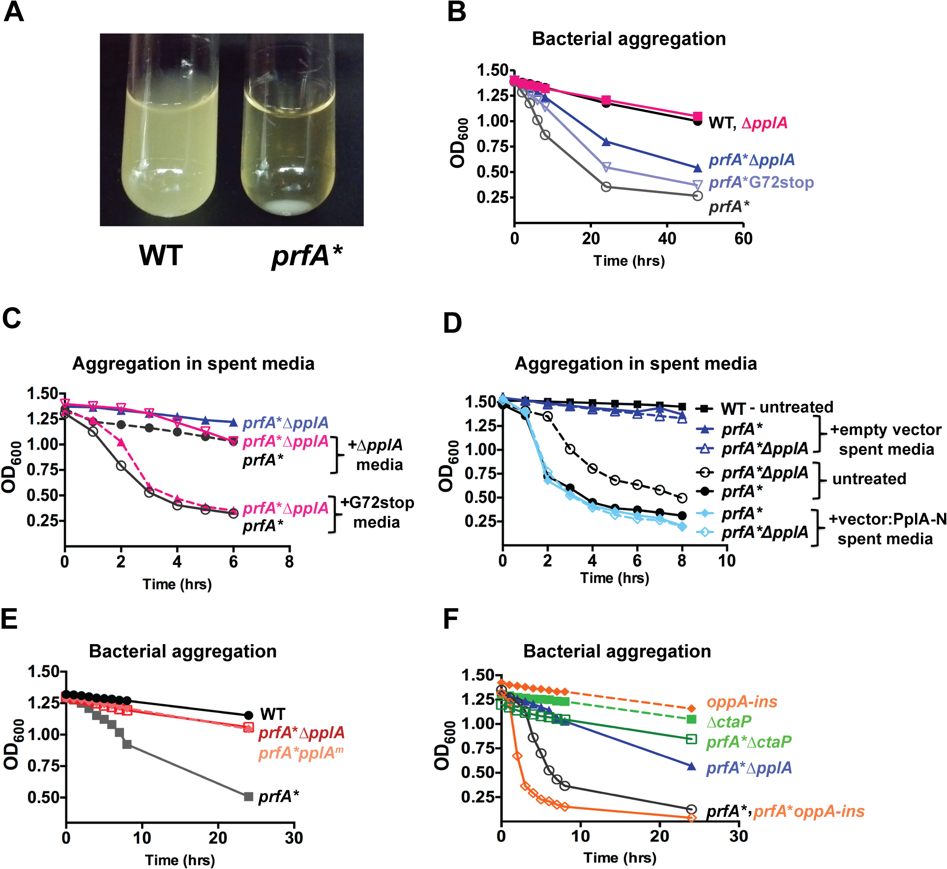 pPplA enhances bacterial aggregation in broth culture.