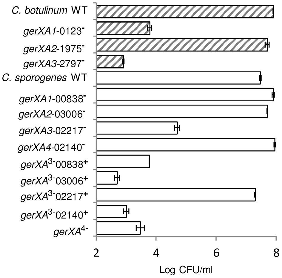 Capacity of WT or mutant spores to germinate and form colonies.