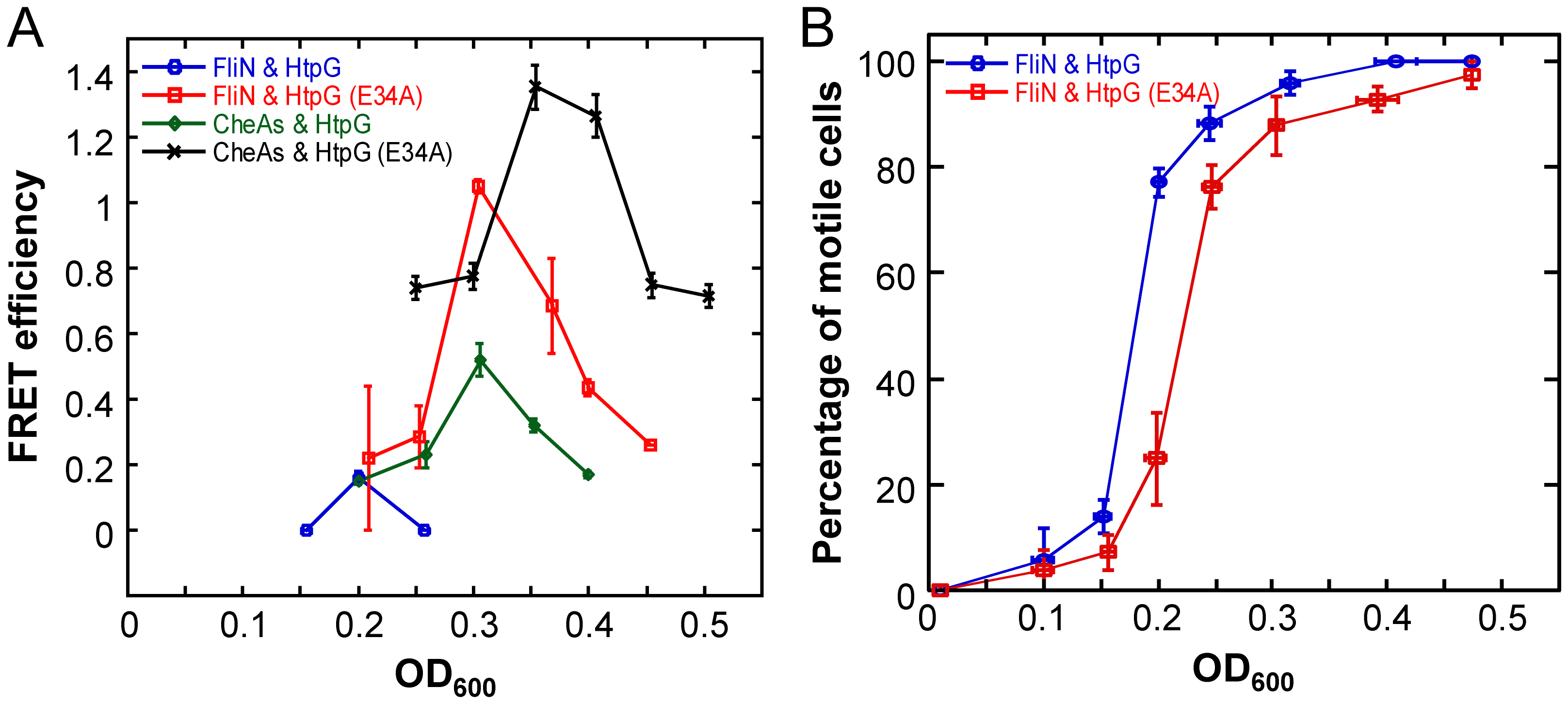Growth-stage-dependent interaction of HtpG with FliN and CheA.