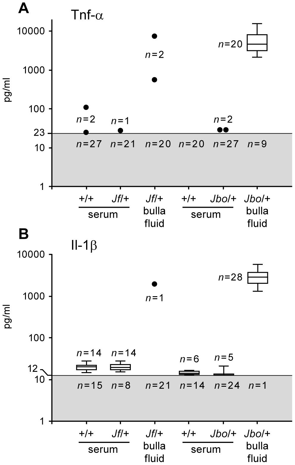Il-1β and Tnf-α titers in bulla fluids are elevated in <i>Jbo/+</i> but not <i>Jf/+</i> mice.