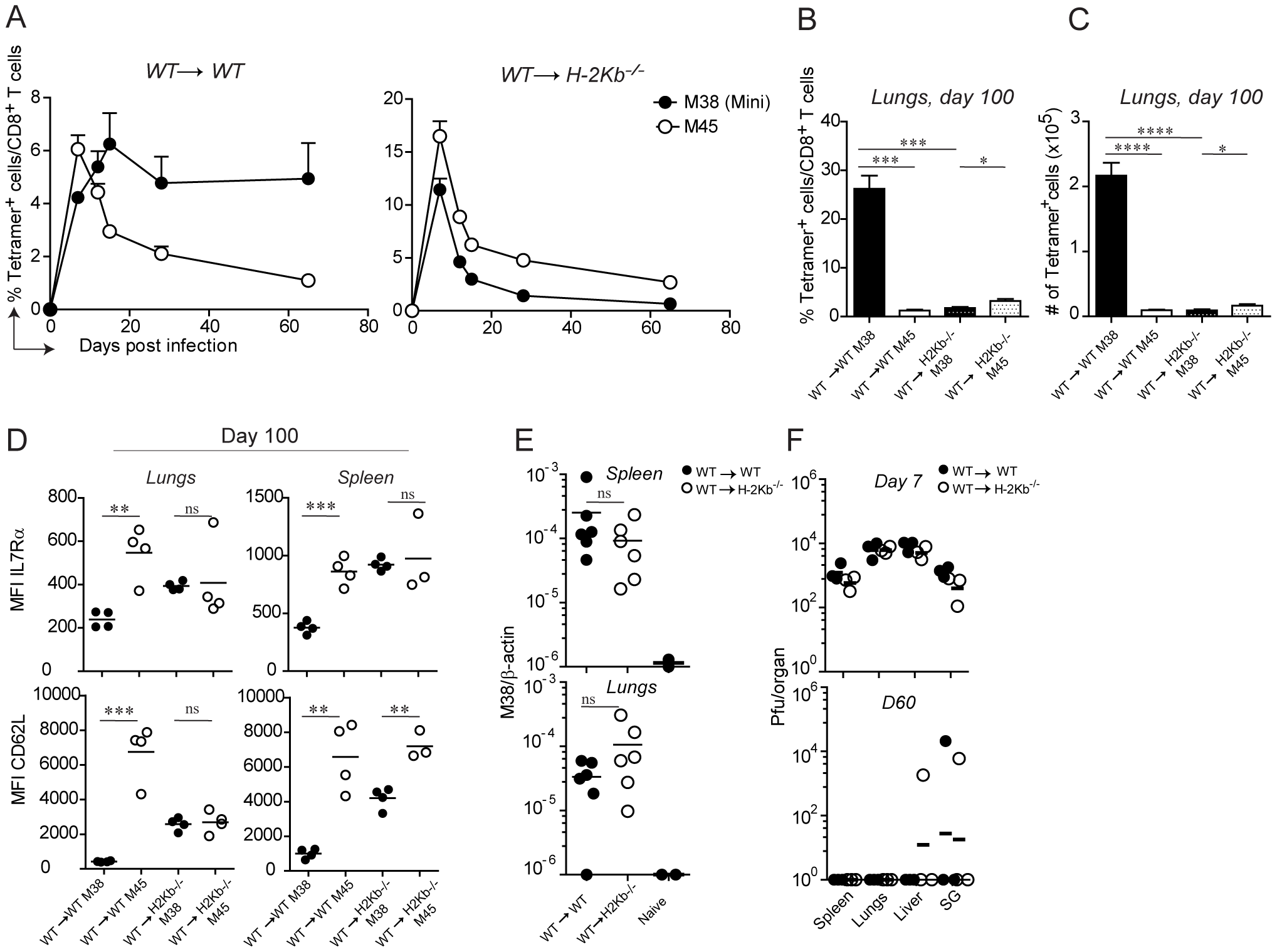 Antigen presentation by non-hematopoietic cells is essential for M38-specific CD8 T cell inflation.
