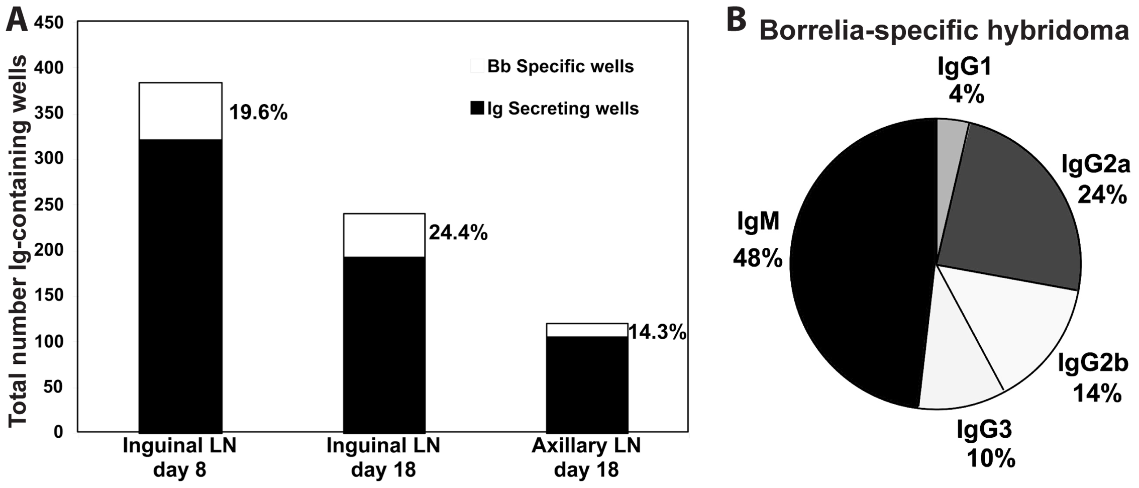 Lymph nodes of <i>B. burgdorferi</i>-infected mice contain large numbers borrelia-specific B cells.