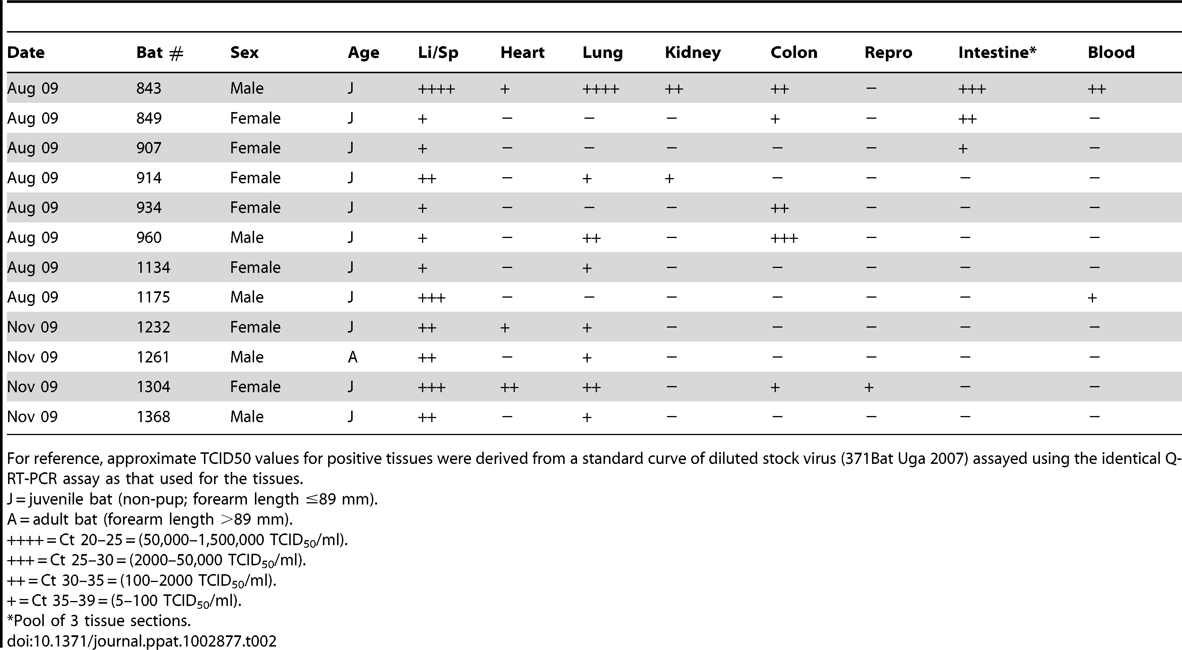 Summary of <i>Rousettus aegyptiacus</i> found positive for Marburg virus in multiple tissues by Q-RT-PCR.