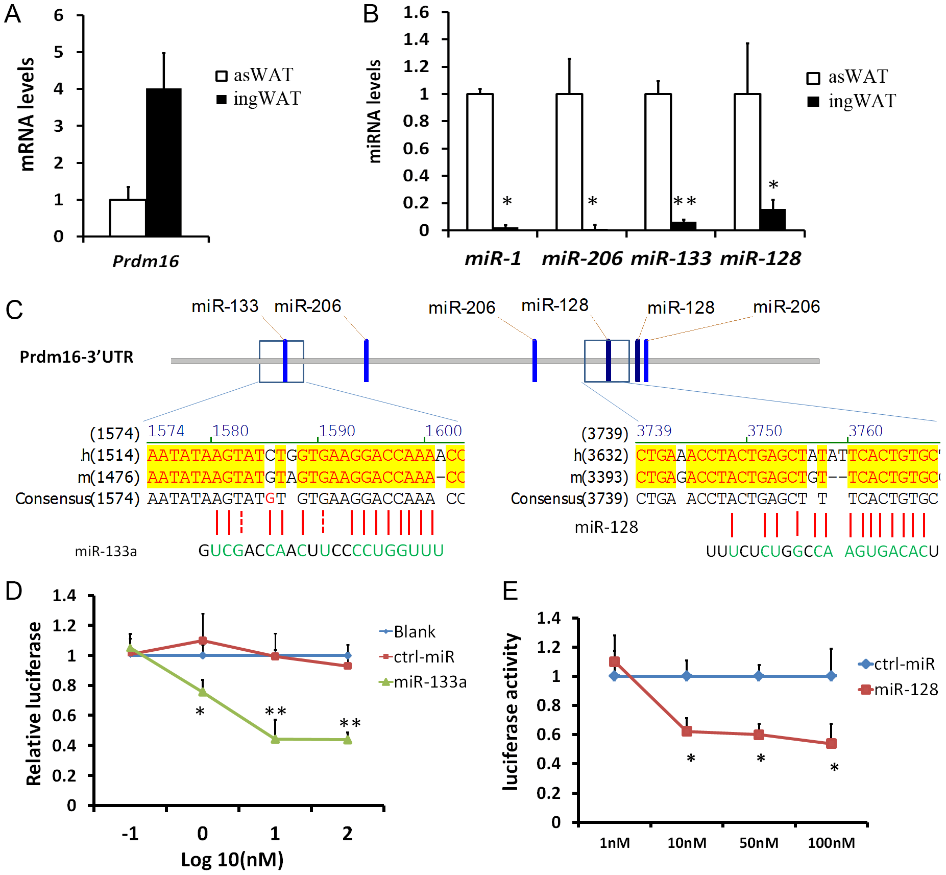 miR-133a and miR-128 target the 3′ UTR of Prdm16 in HEK293 cells.