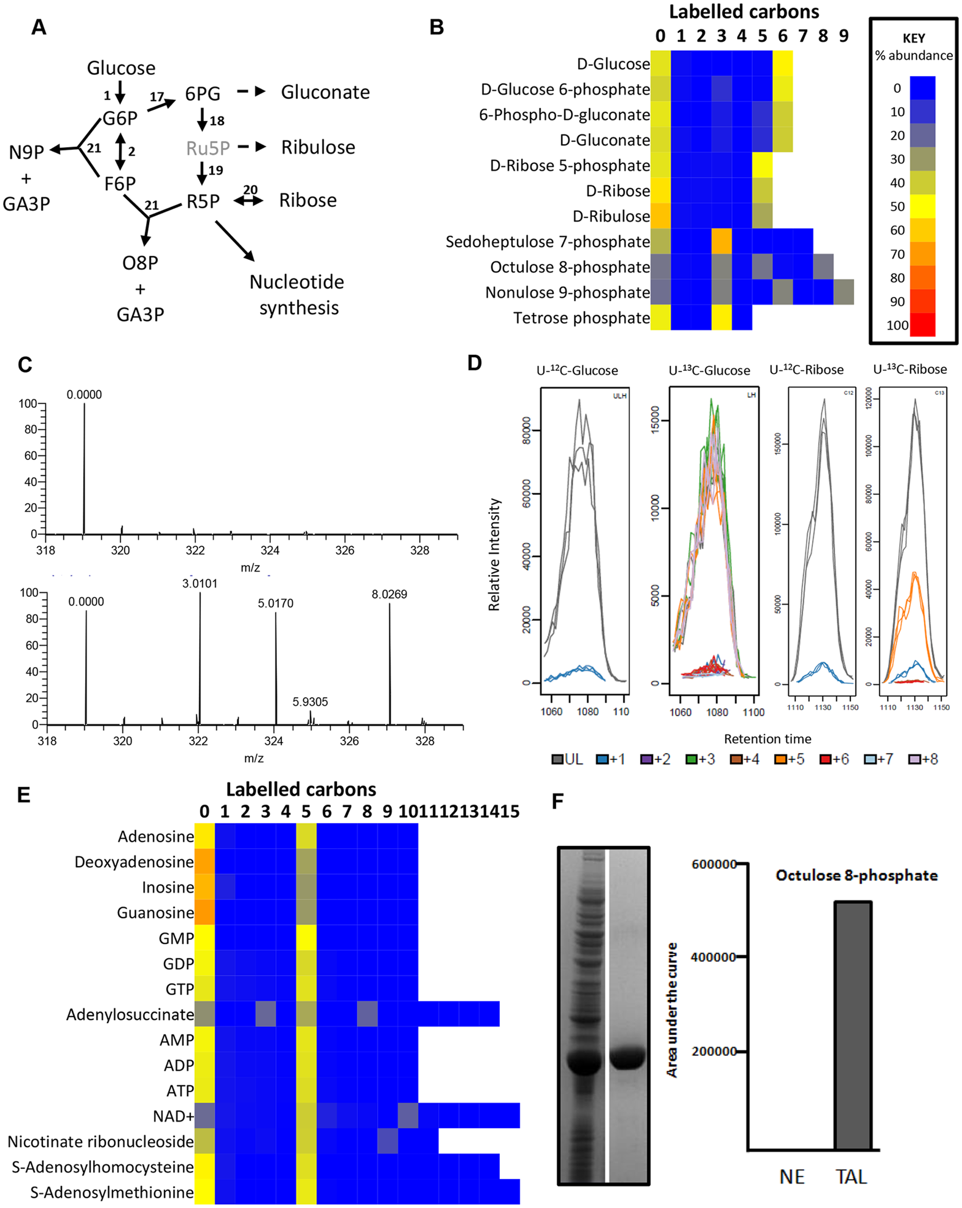 Labelling of pentose phosphate pathway and purine nucleotides from 50% U-13C-glucose in BSF <i>T</i>. <i>brucei</i>.