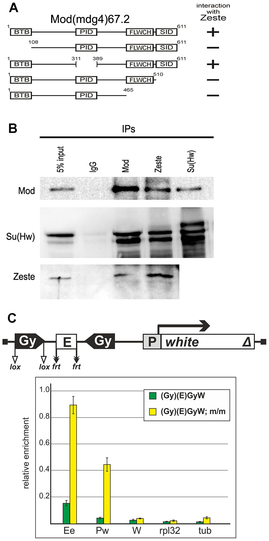 Testing for the interaction between the Mod(mdg4)-67.2 and Zeste proteins.