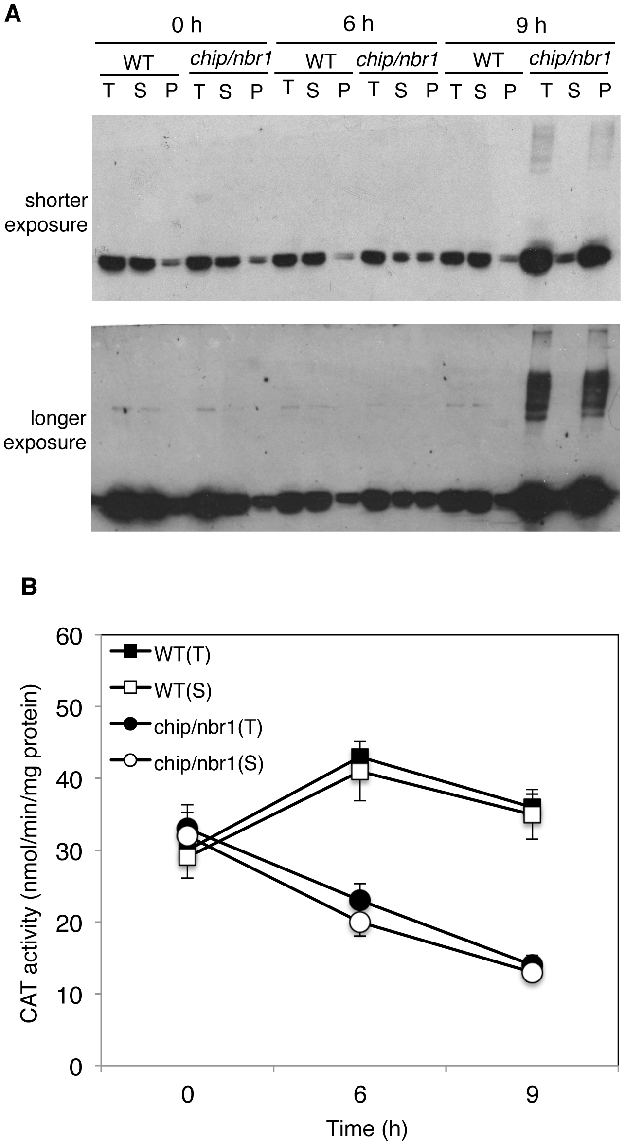 Changes in catalase proteins and activity in response to heat stress.
