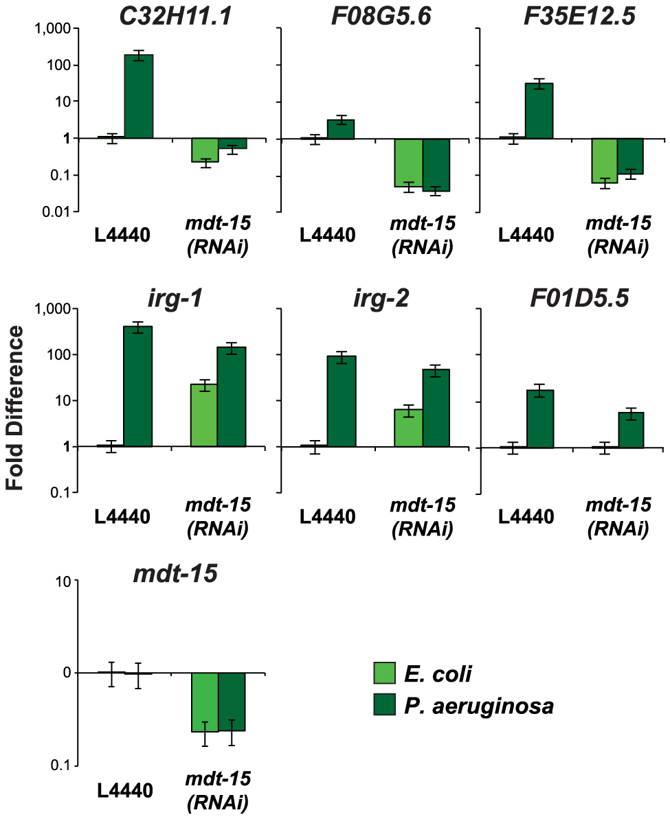 The Mediator subunit MDT-15 regulates the induction of some, but not all, immune genes during <i>P. aeruginosa</i> infection.