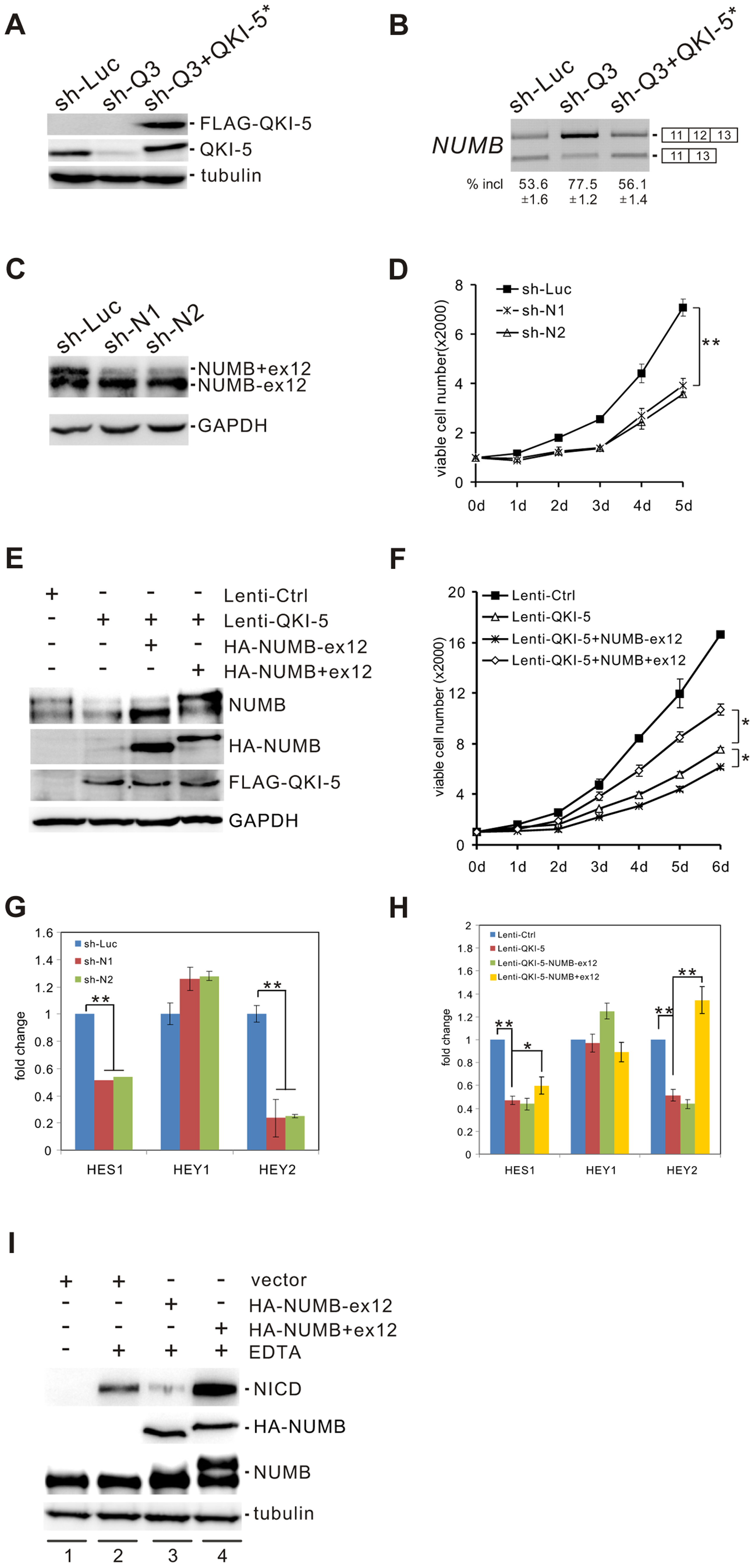QKI-5 regulates <i>NUMB</i> splicing and the Notch signaling pathway.