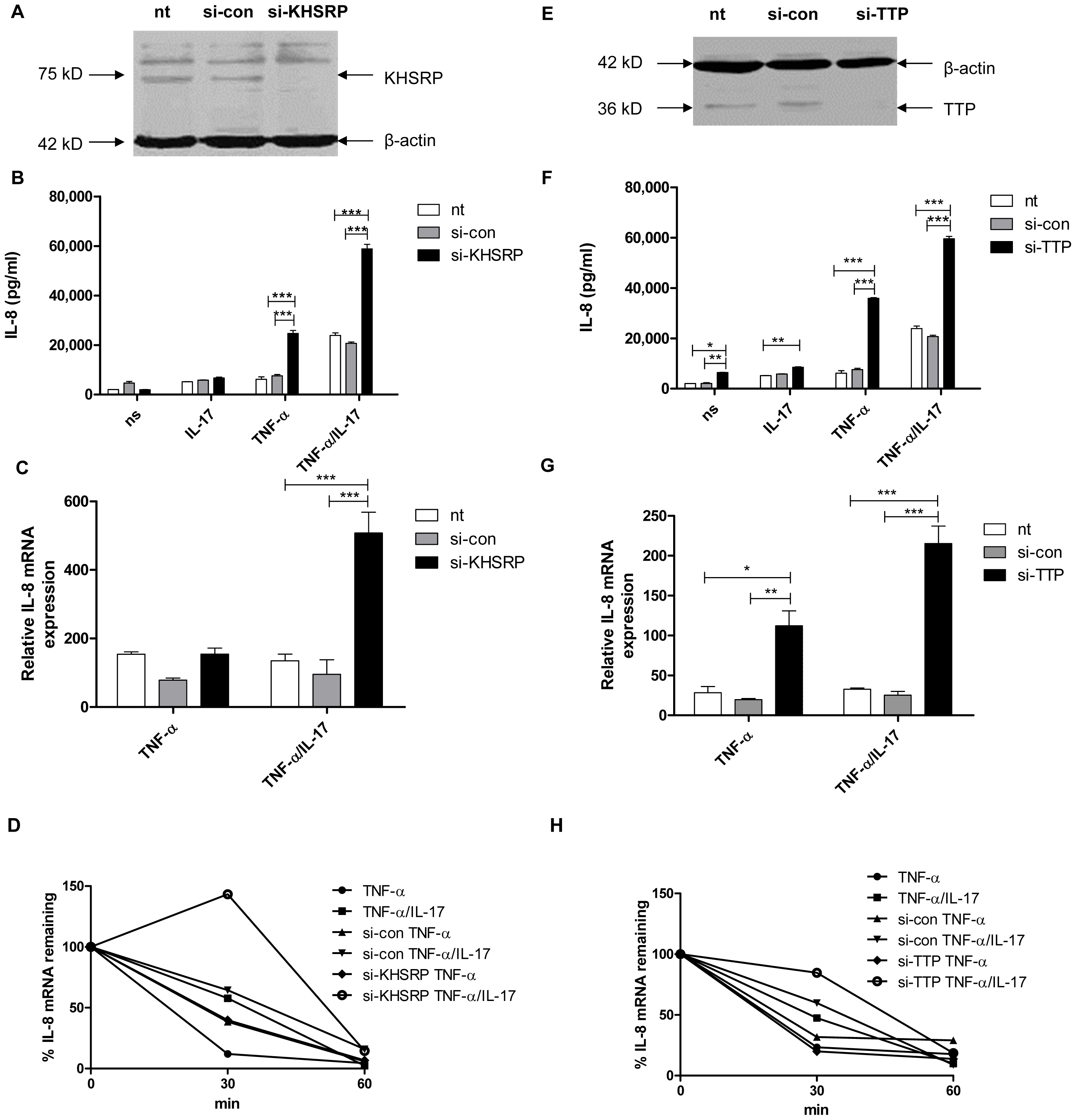 KHSRP and TTP down-regulate IL-8 expression by promoting degradation of IL-8 mRNA.