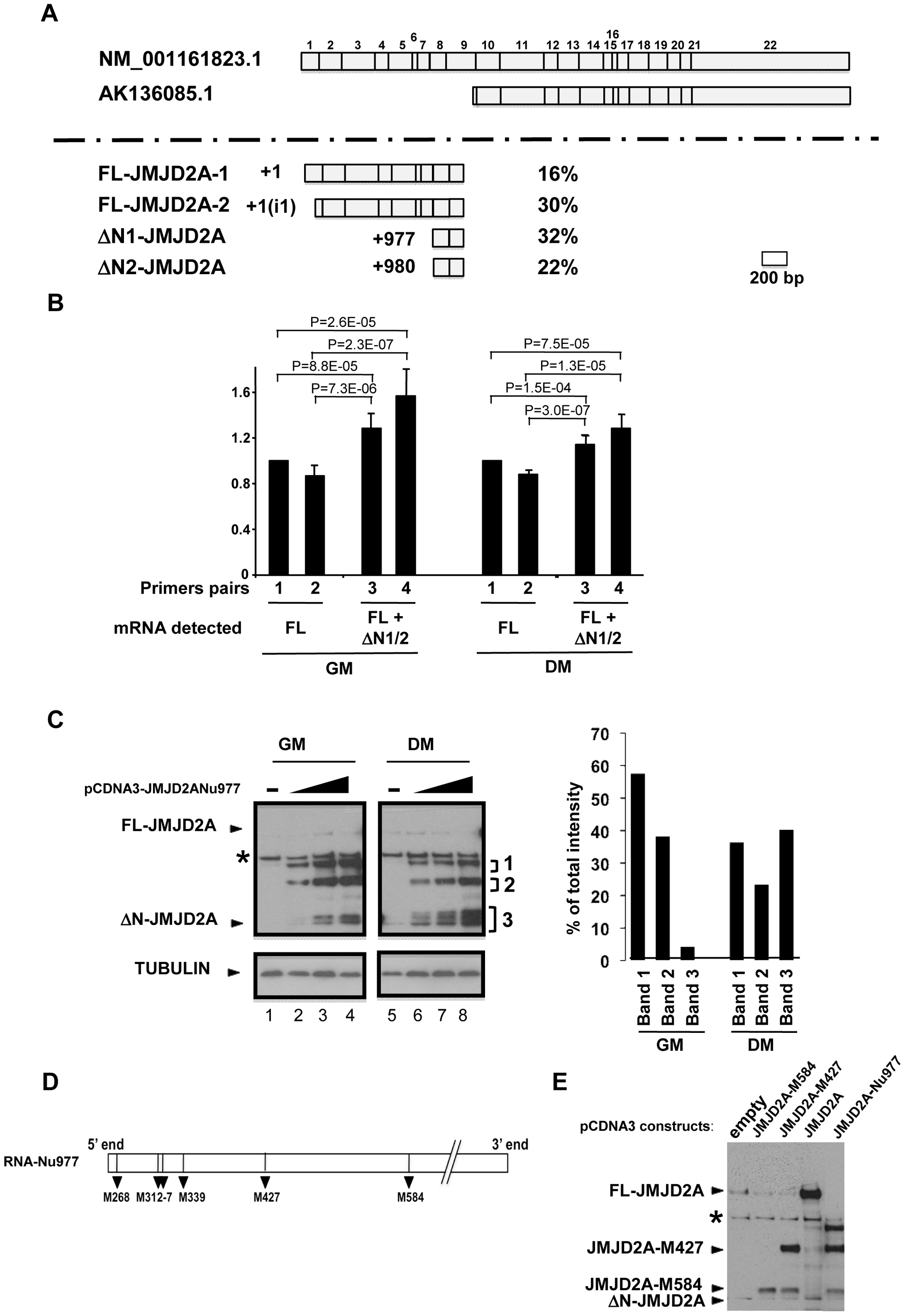 Characterization of the small isoform of JMJD2A.