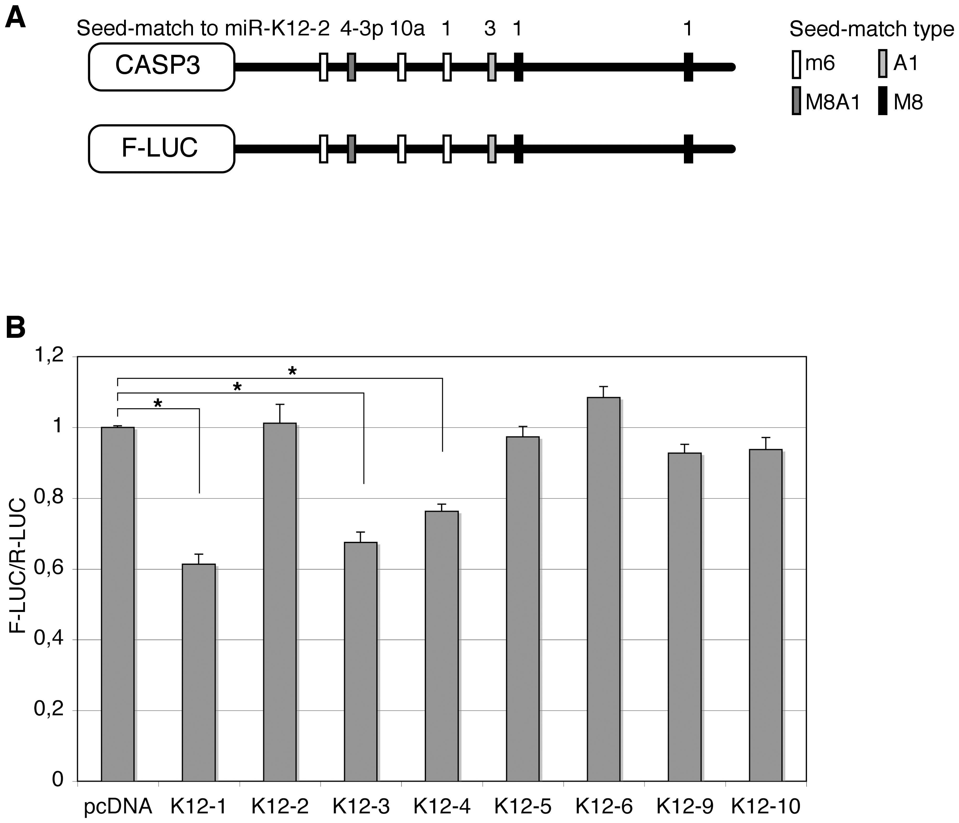 Caspase 3 is targeted by several KSHV miRNAs.