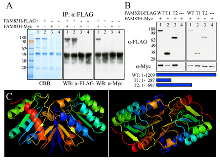 Figure 11. 