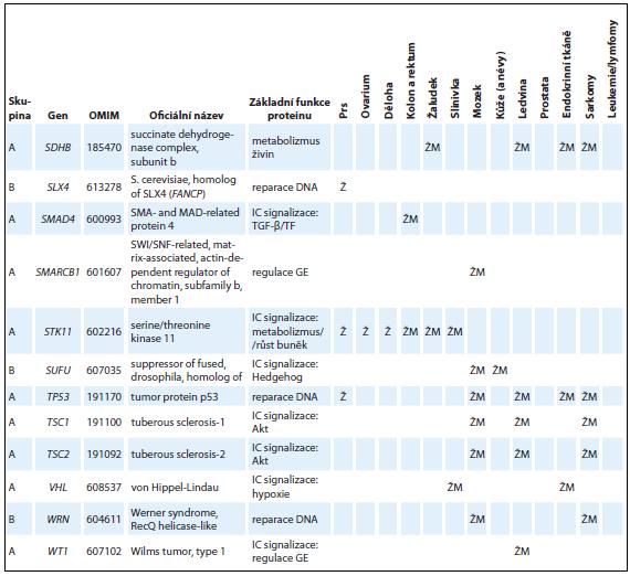 Tab. 1 – pokračování. Přehled základních charakteristik 54 genů zařazených do skupiny A nebo B s charakterizací funkcí kódovaných proteinů a asociací nádorových onemocnění  v příslušných lokalizacích spojených s nosičstvím dědičných patogenních variant.