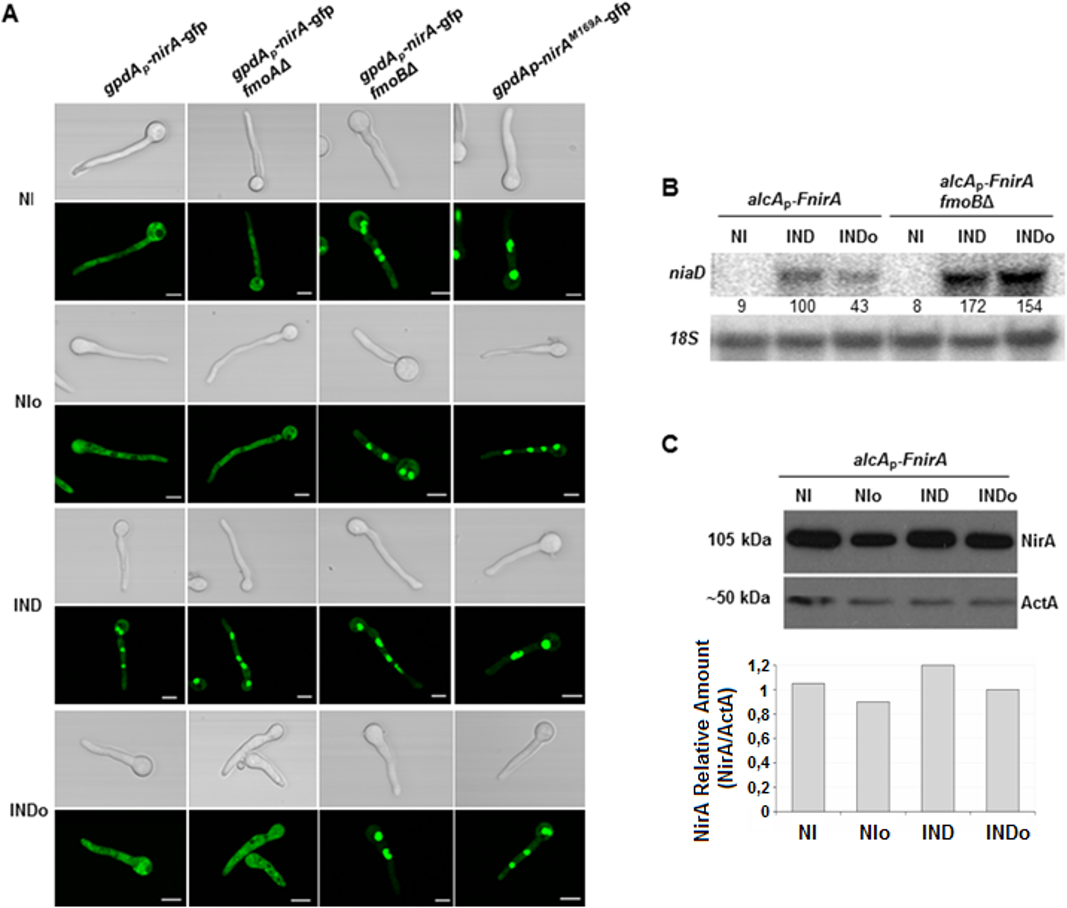 Methionine oxidation in the NirA-NES defines subcellular localization and activity.