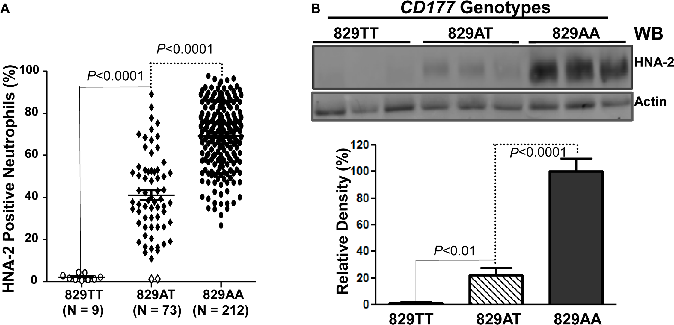 Association of <i>CD177</i> SNP 829A>T with HNA-2 expression.