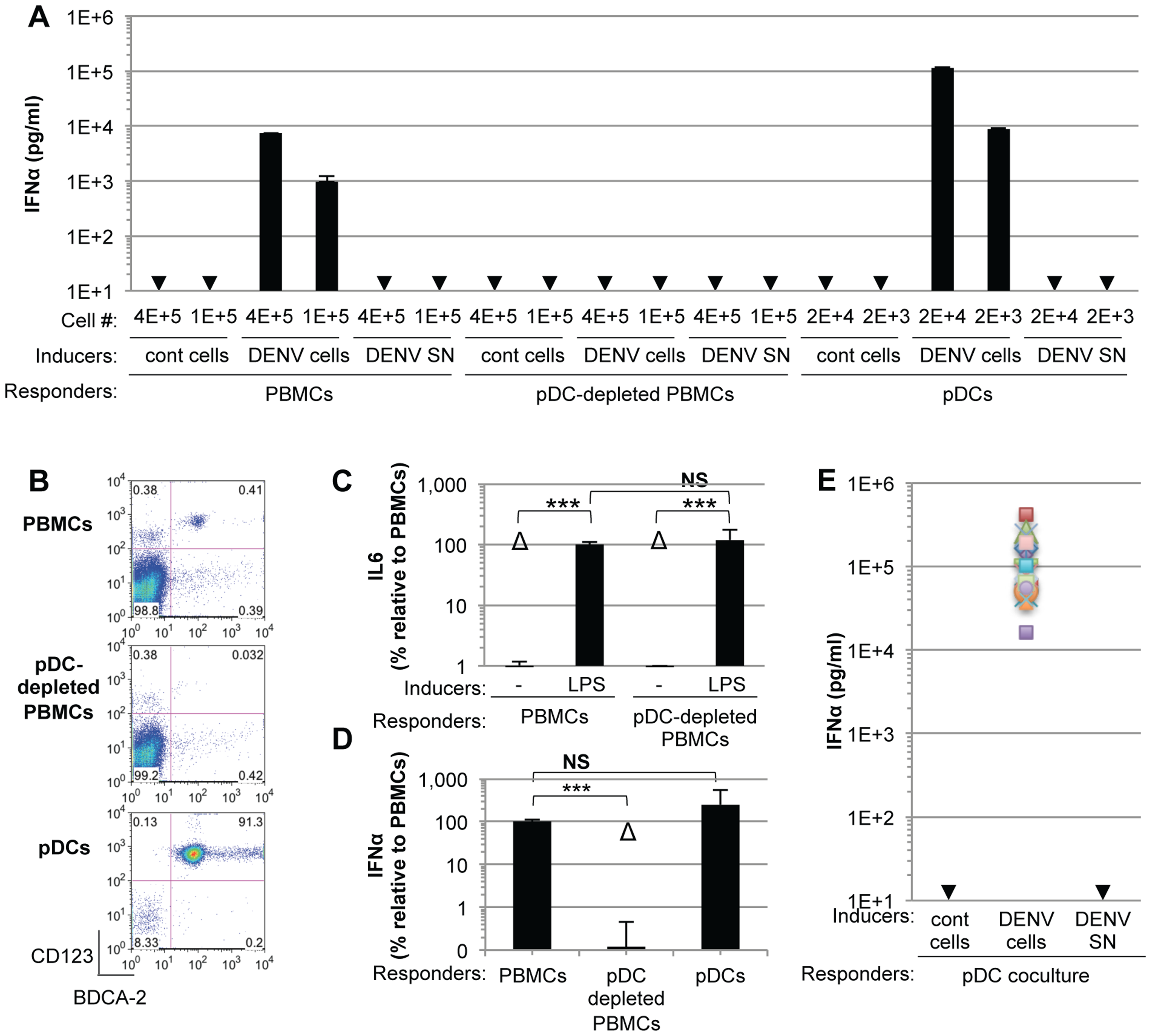 pDCs robustly produce IFNα in response to DENV infected cells.
