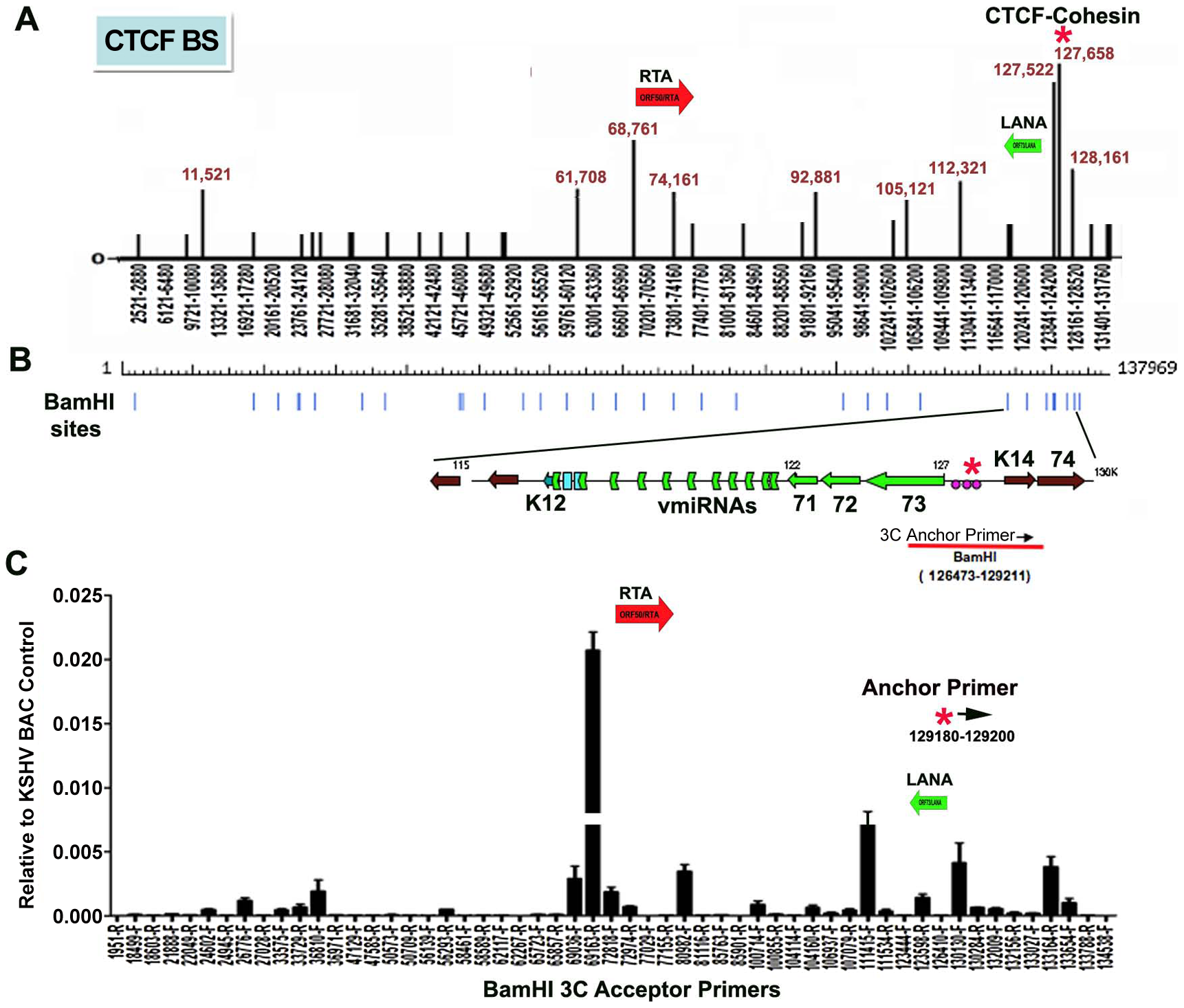 Chromatin conformation capture (3C) analysis of KSHV genome in BCBL1 latently infected B-cells.