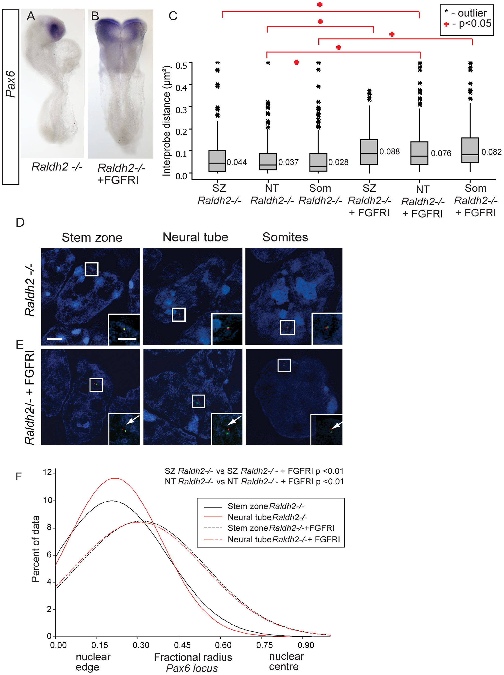 Inhibition of FGFR signalling in <i>Raldh2</i> mutants rescues higher order chromatin organisation around the <i>Pax6</i> locus, but not <i>Pax6</i> transcription.