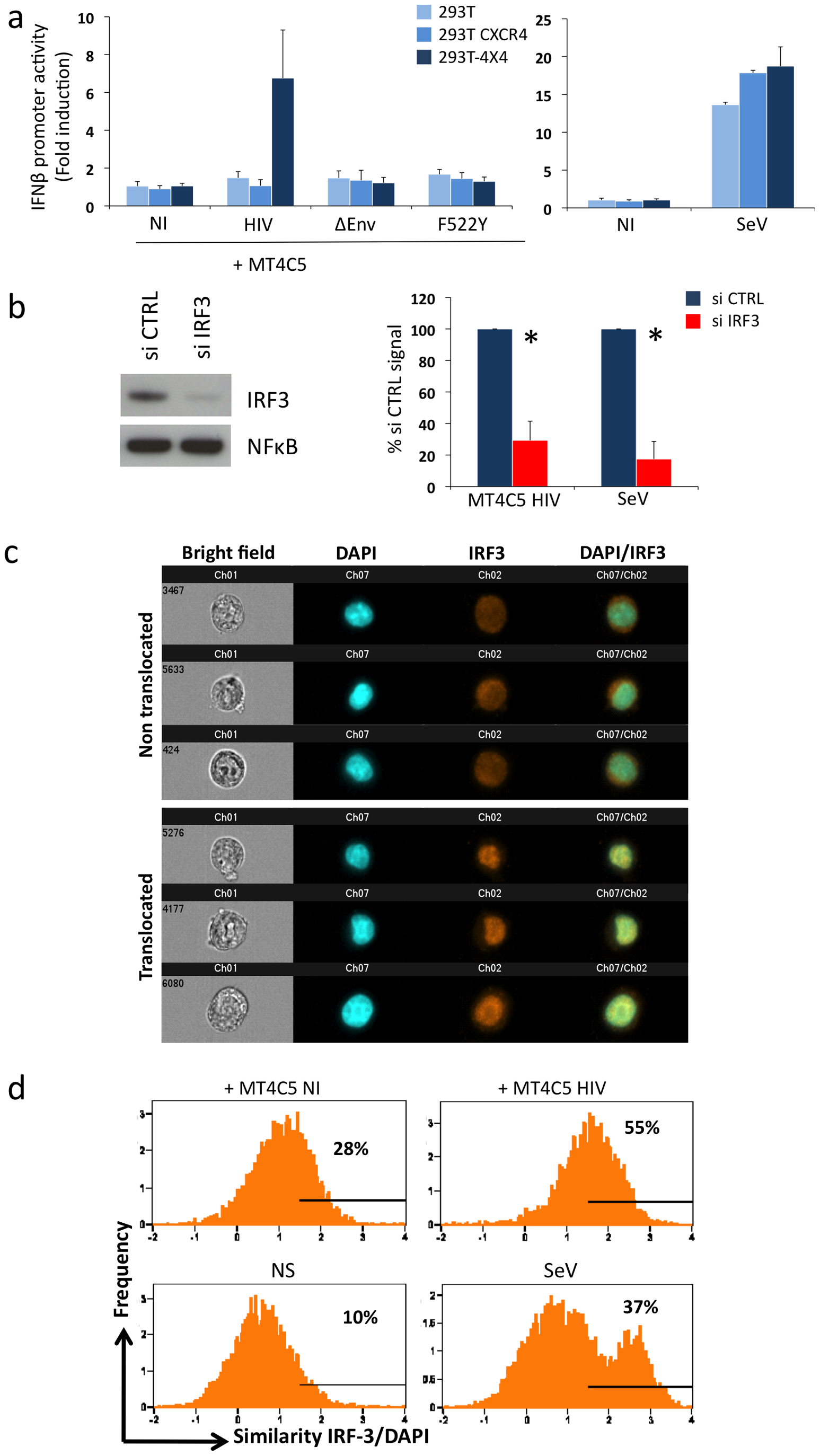 Sensing of HIV-infected lymphocytes by 293T-derived epithelial cells.