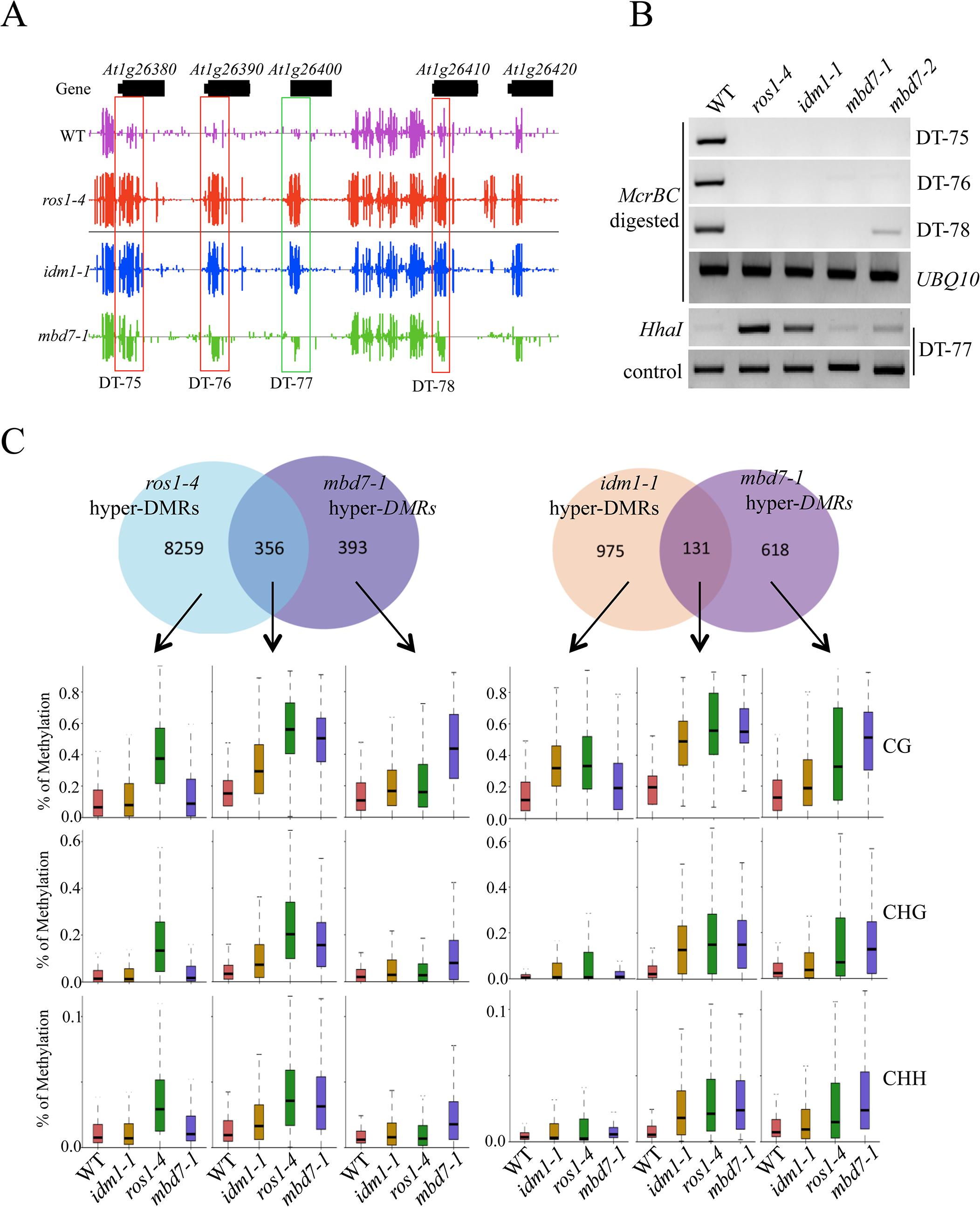 Methylome analysis of <i>mbd7-1</i> mutant.