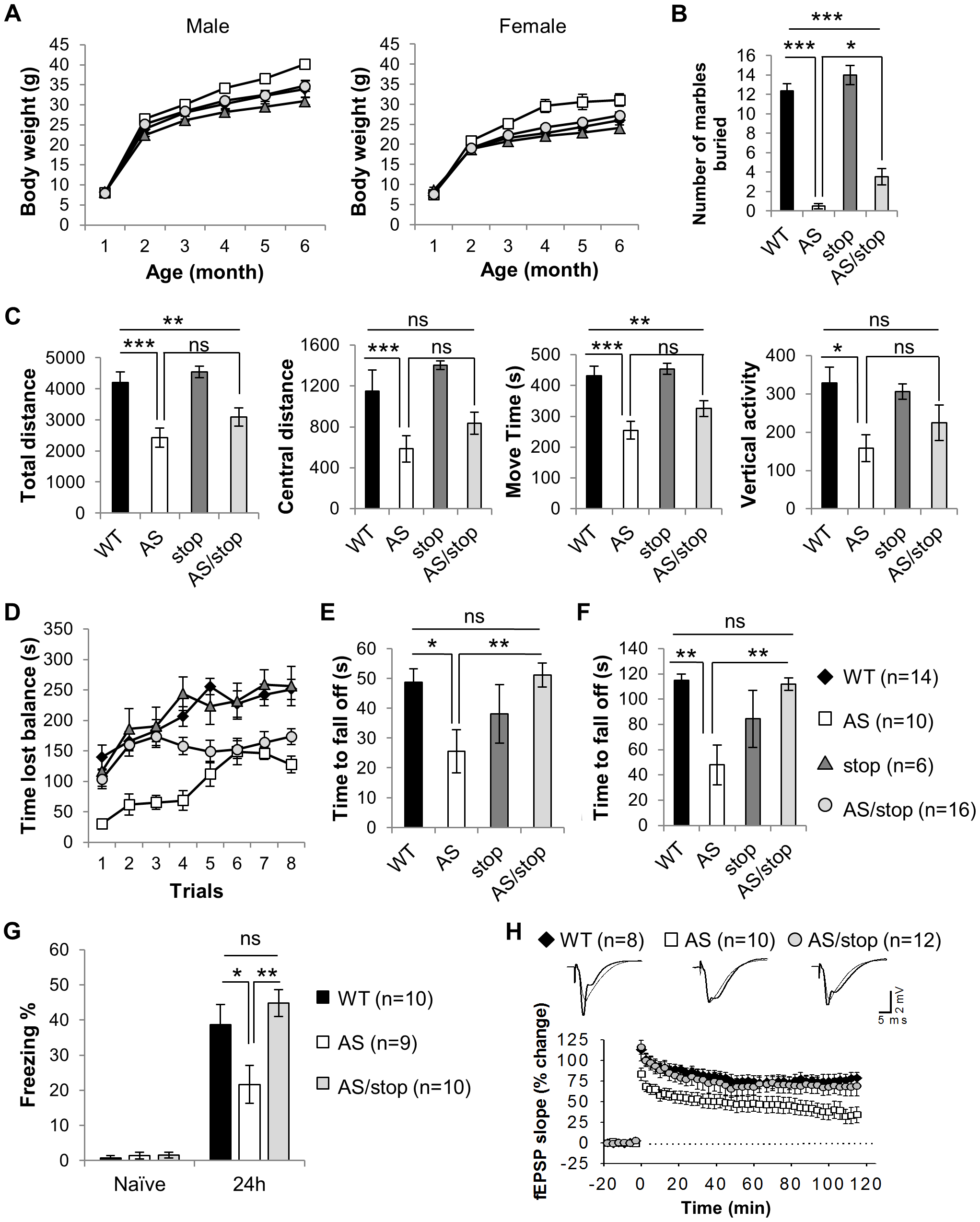 Expression of paternal Ube3a improves phenotypic defects in the AS mouse model.