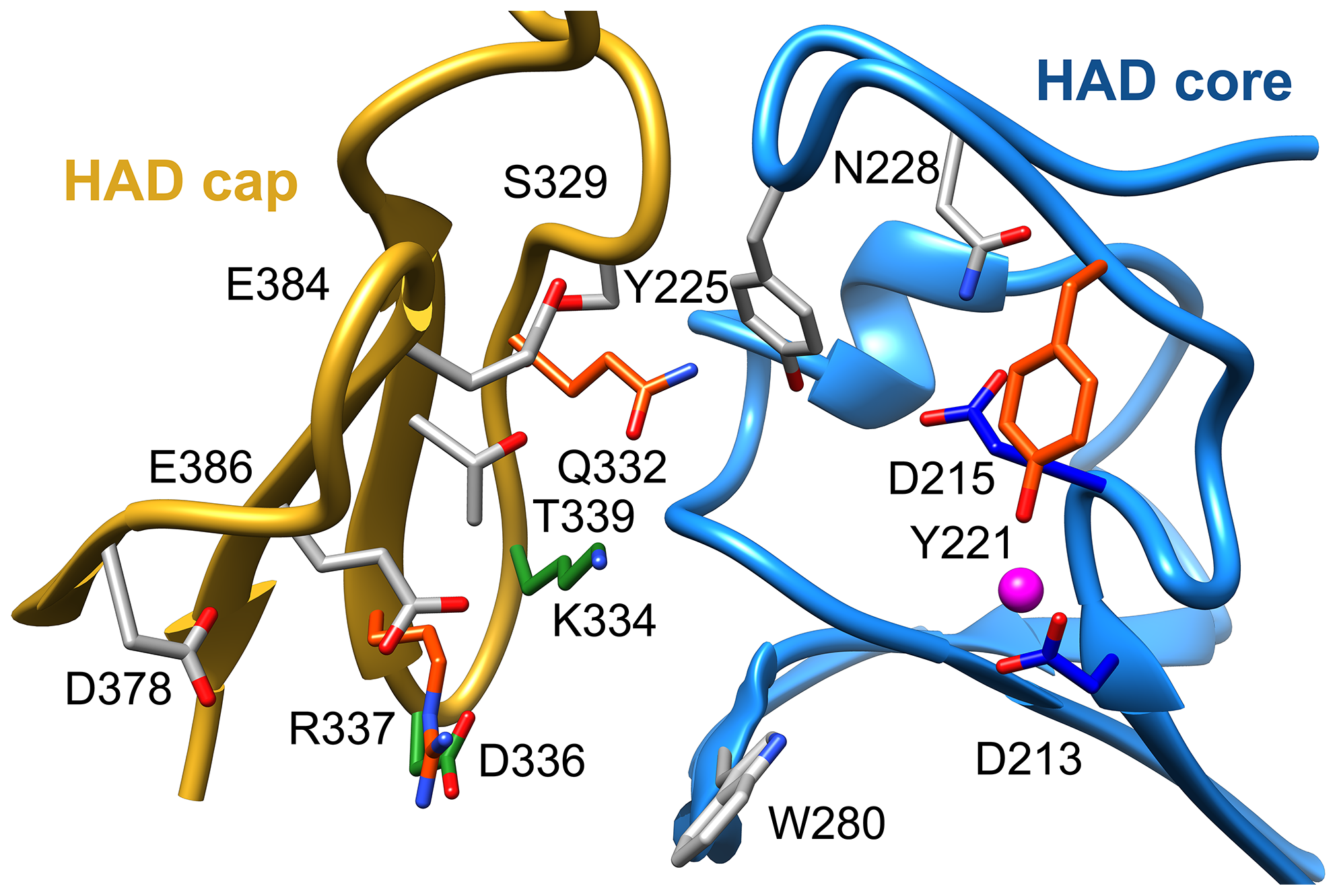 Putative substrate interacting residues in <i>B. malayi</i> analyzed by mutagenesis and kinetics.