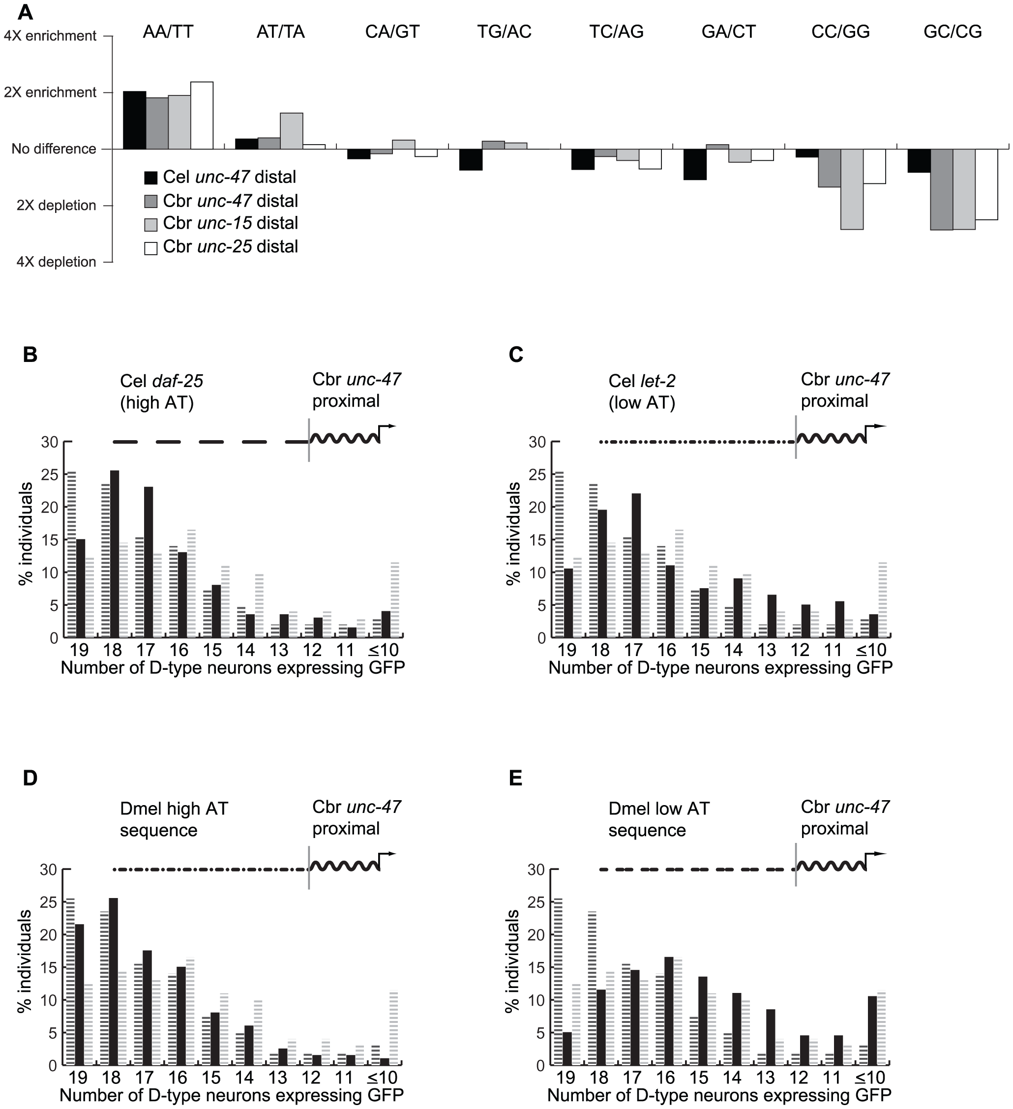 Promoter regions that confer robustness are enriched for nucleosome-depleted sequences.