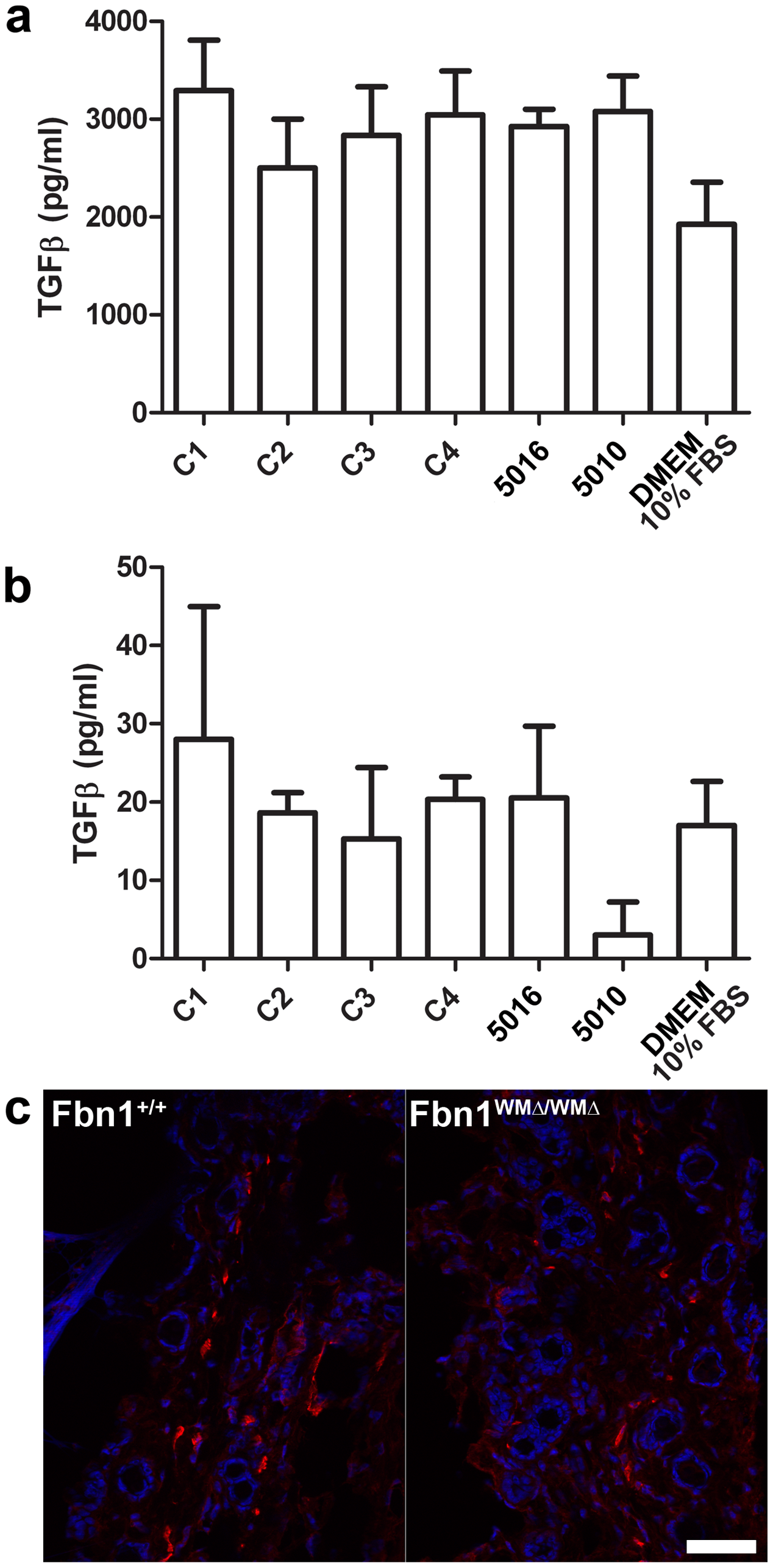 Measurements of TGF-β in cultured fibroblasts; α-smooth muscle actin staining.