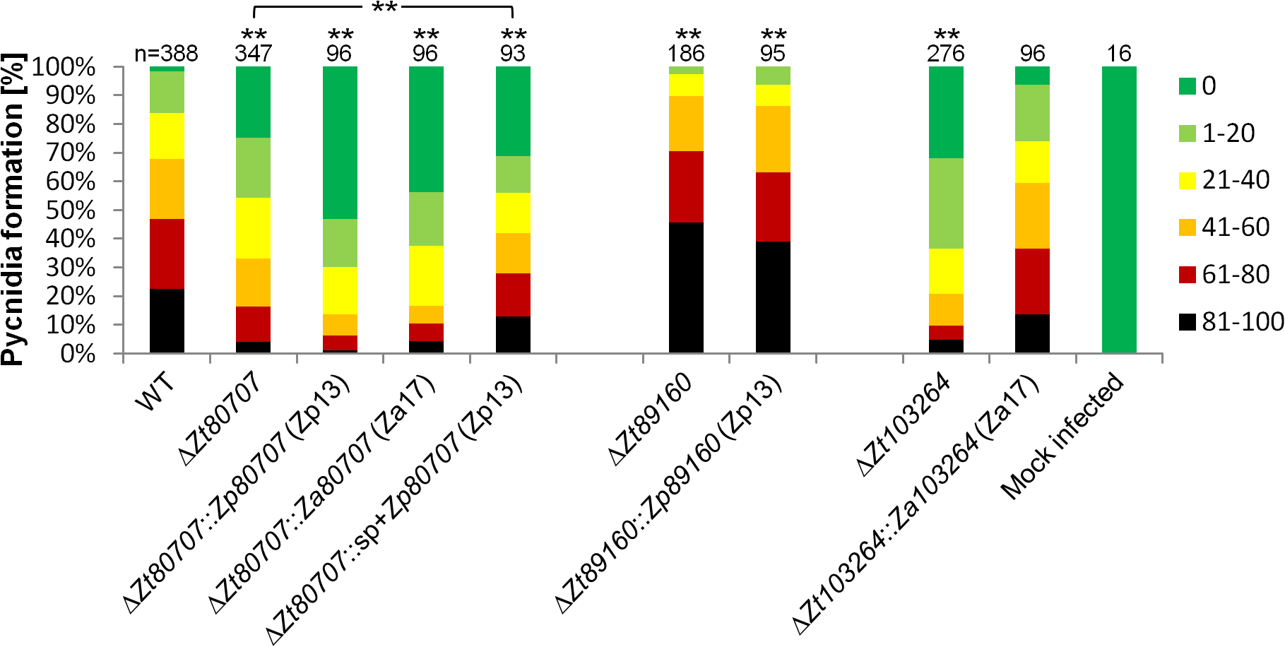 <i>In planta</i> phenotypic assay demonstrates impact of gene replacement in <i>Z</i>. <i>tritici</i>.