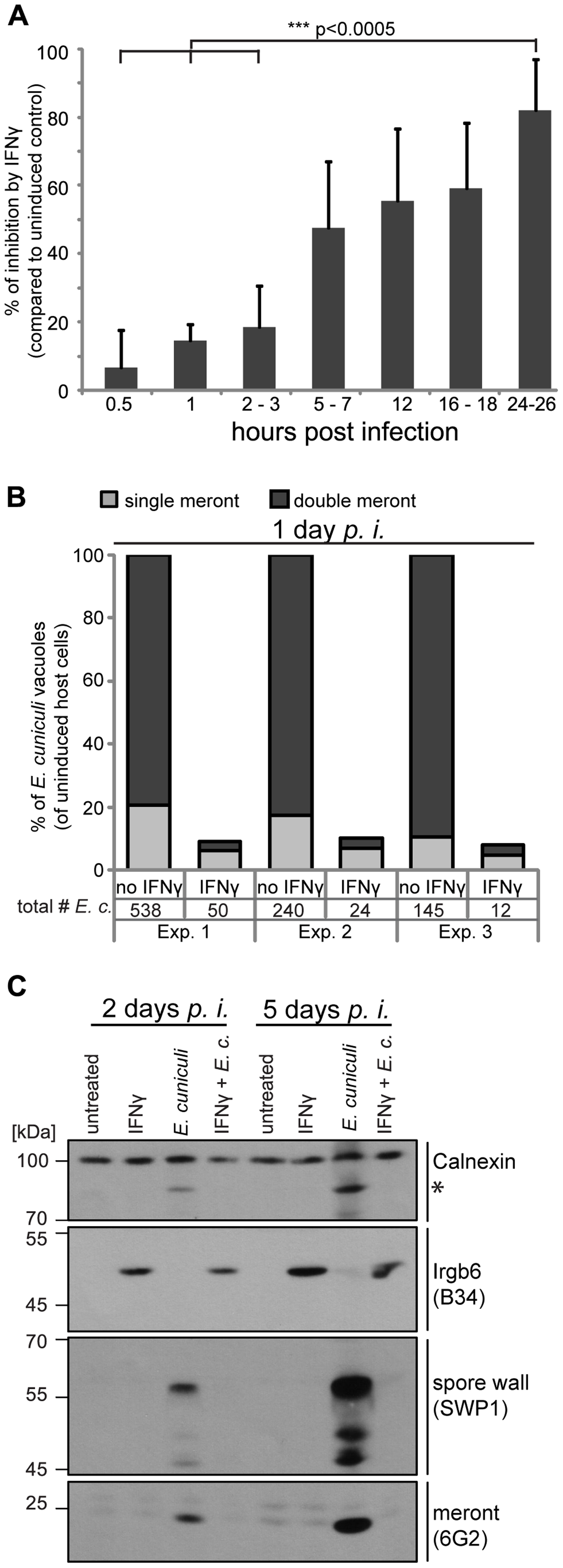 IFNγ restricts <i>E. cuniculi</i> growth in mouse embryonic fibroblasts.