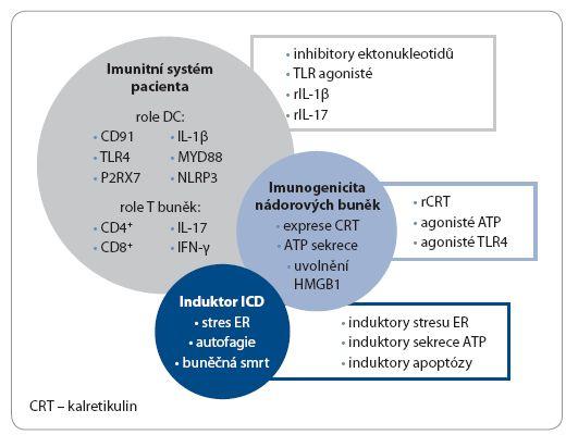Využití imunogenní buněčné smrti v konceptu protinádorové terapie a možné strategie navození imunogenní buněčné smrti in vivo.