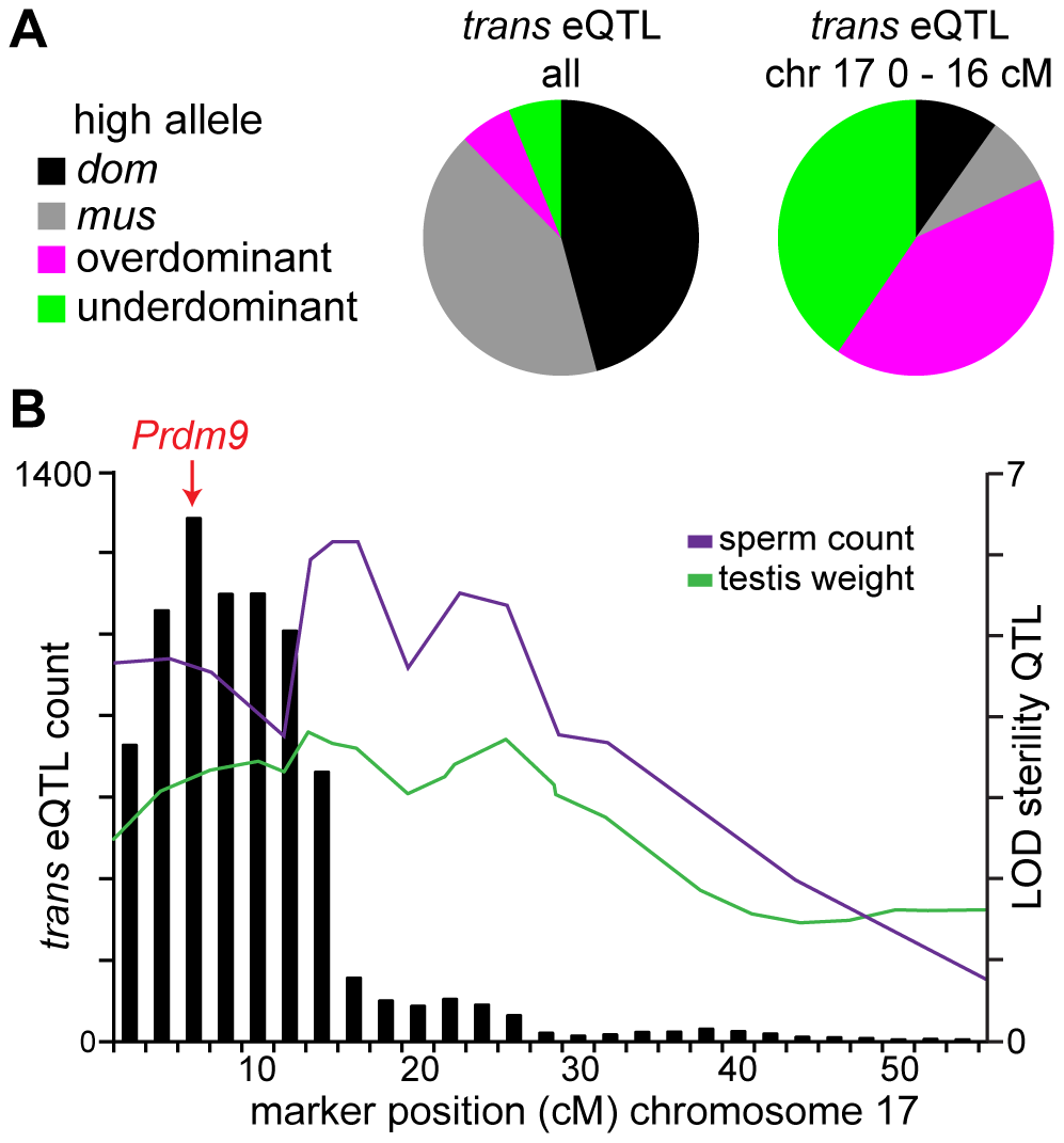 Chromosome 17 hotspot position and effects implicate <i>Prdm9</i>.