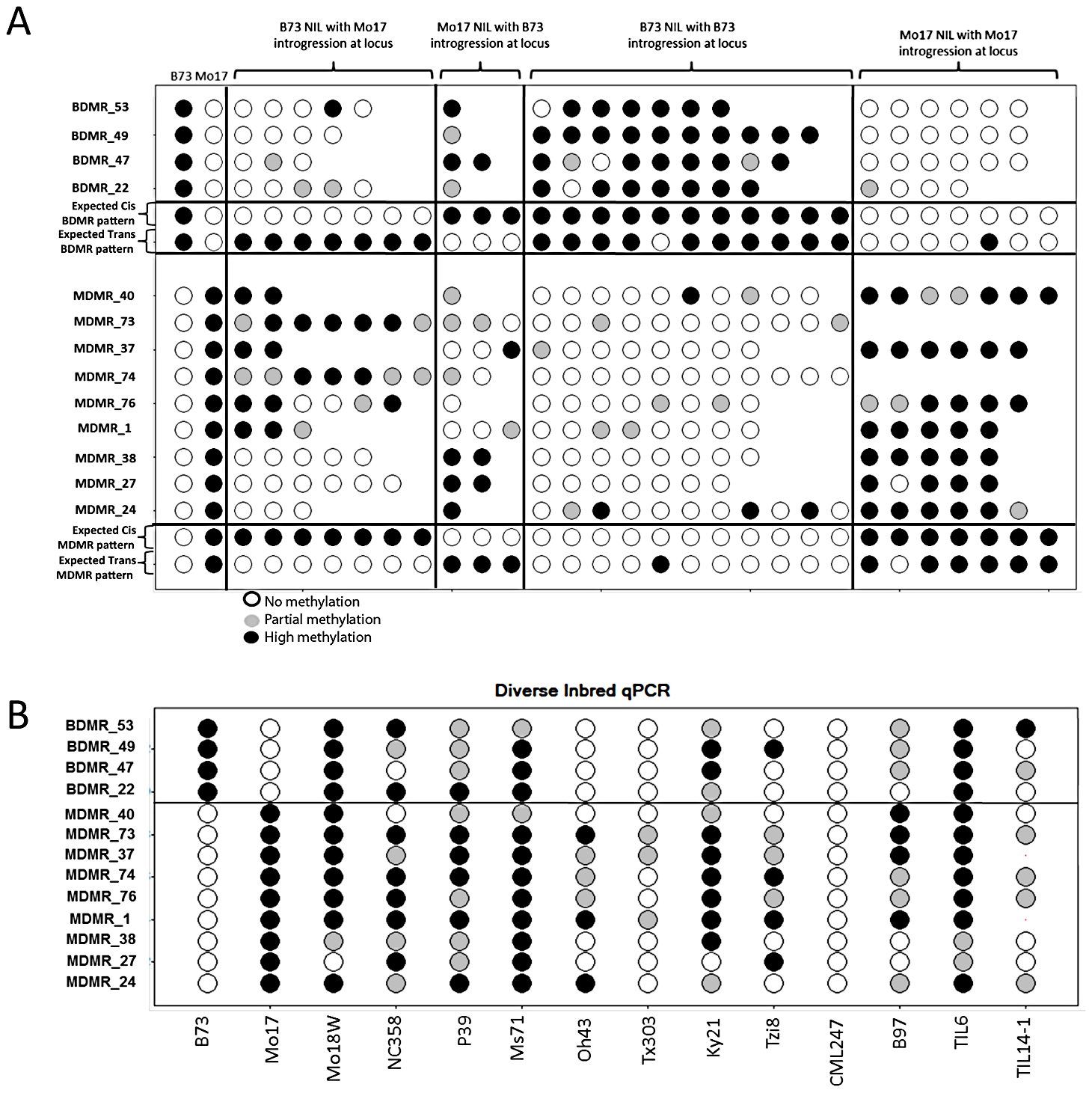 Variable DNA methylation patterns in near-isogenic lines and diverse inbreds.