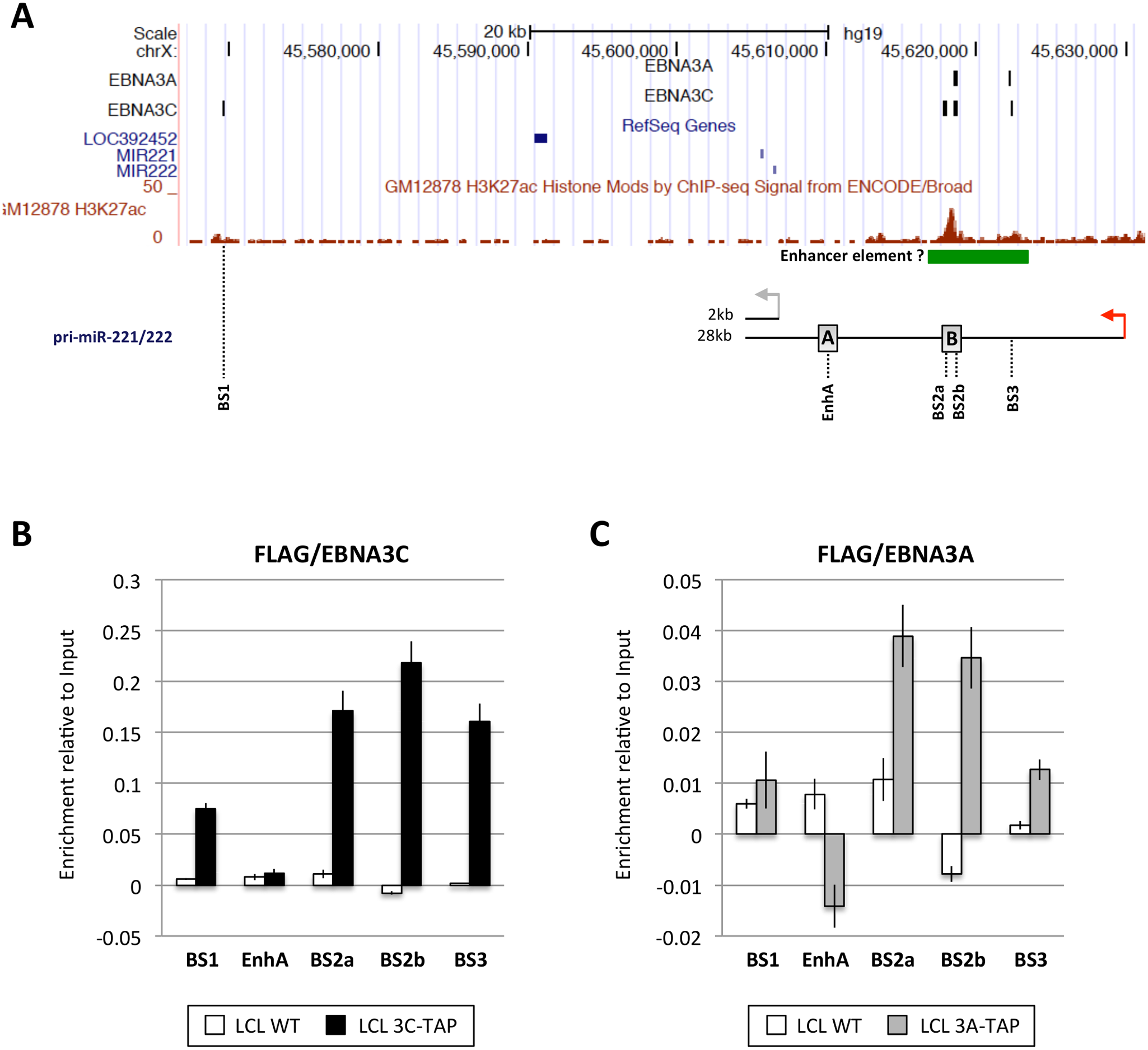 EBNA3A and EBNA3C bind near the miR-221/miR-222 locus.