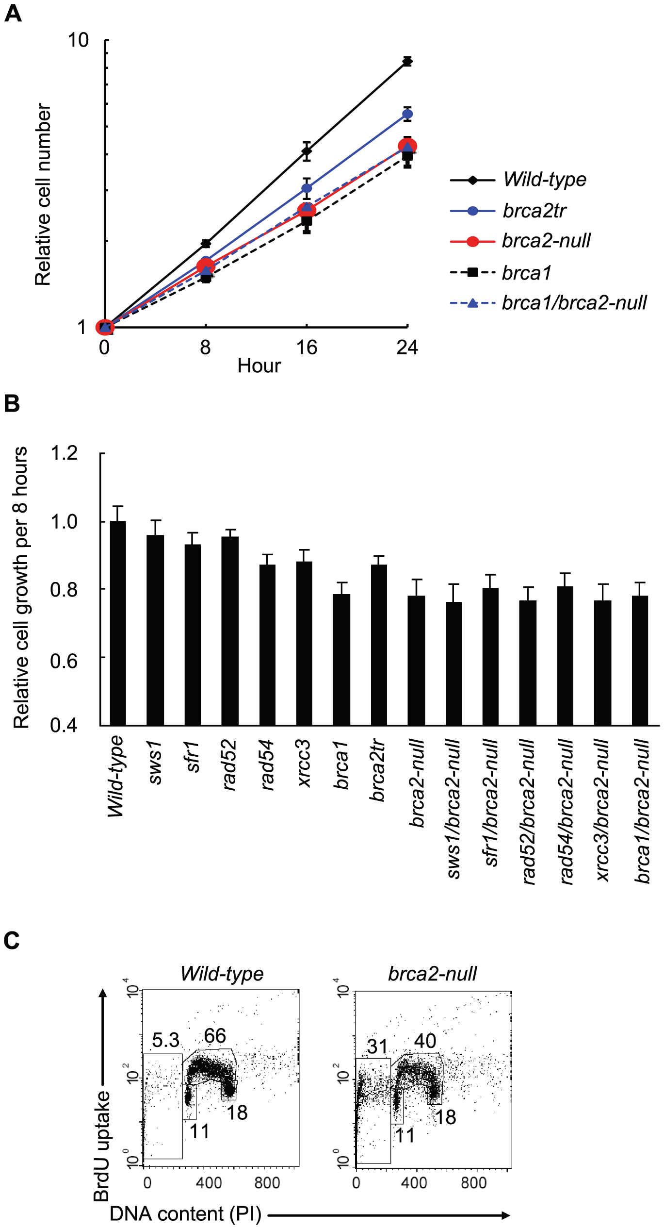 Decreased cellular proliferation in <i>brca2-null</i> cells.