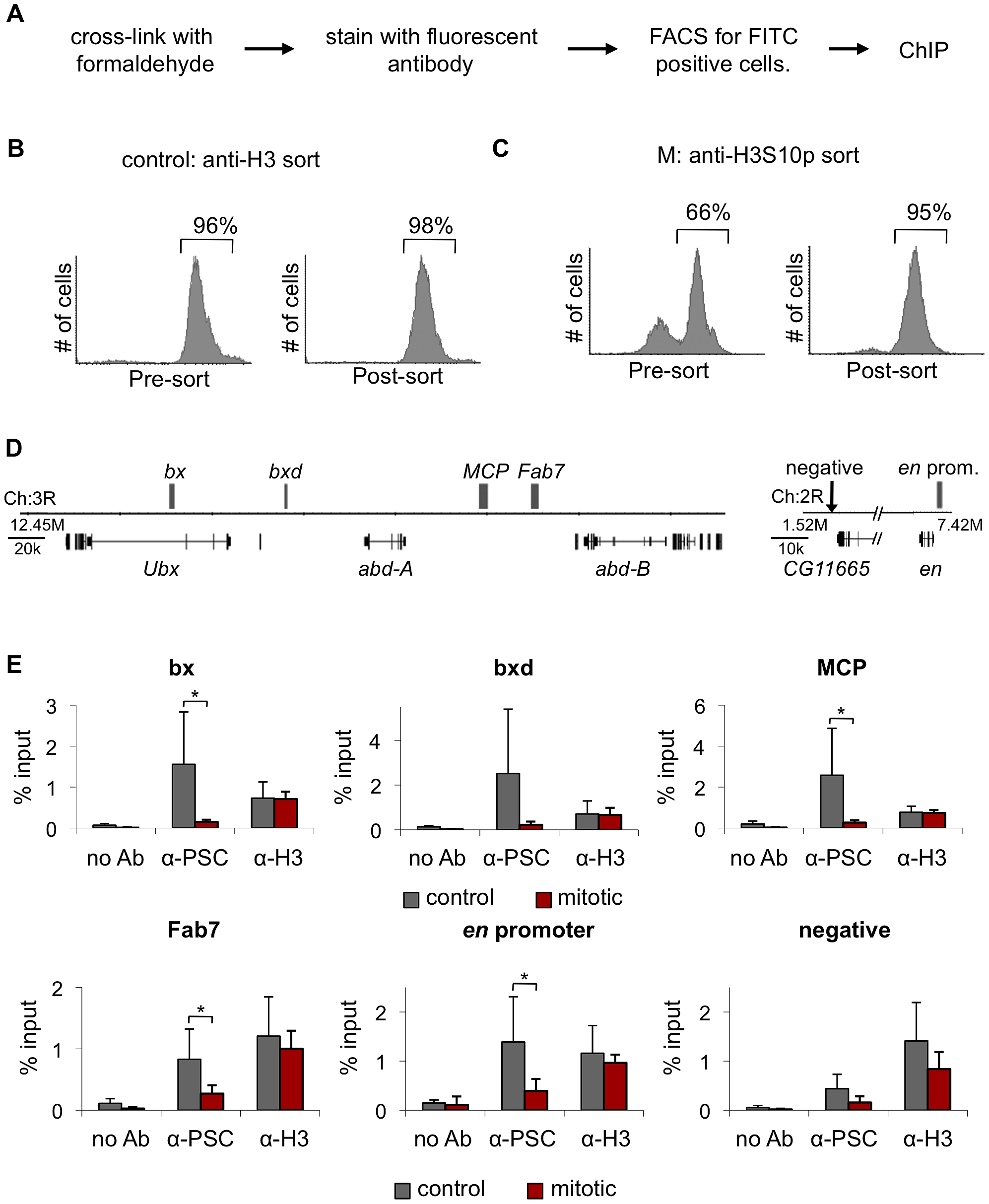 PSC binding is not detected at PREs in mitotic cells.
