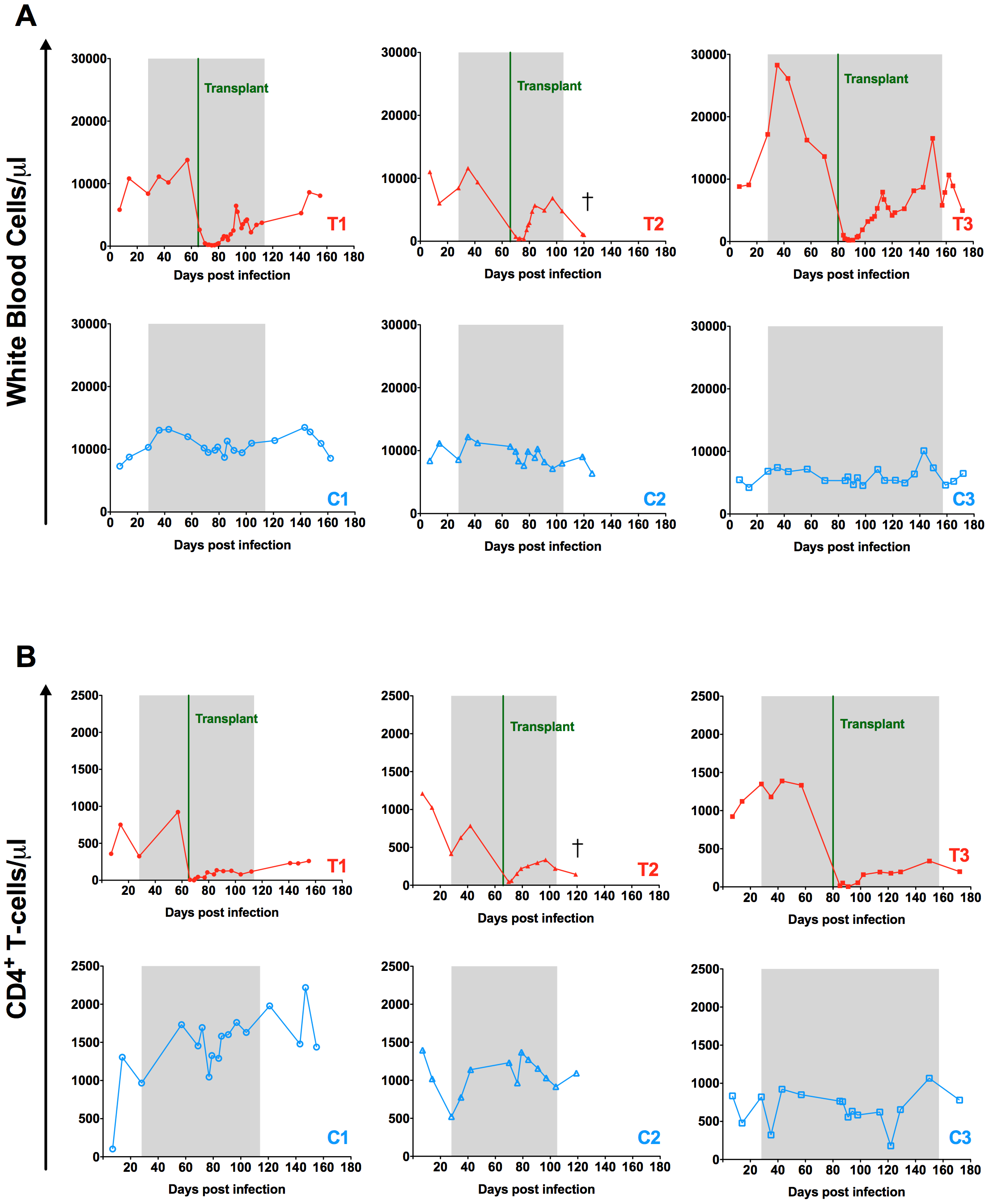 Effect of autologous HSCT on white blood cell and CD4<sup>+</sup> T-cell counts.