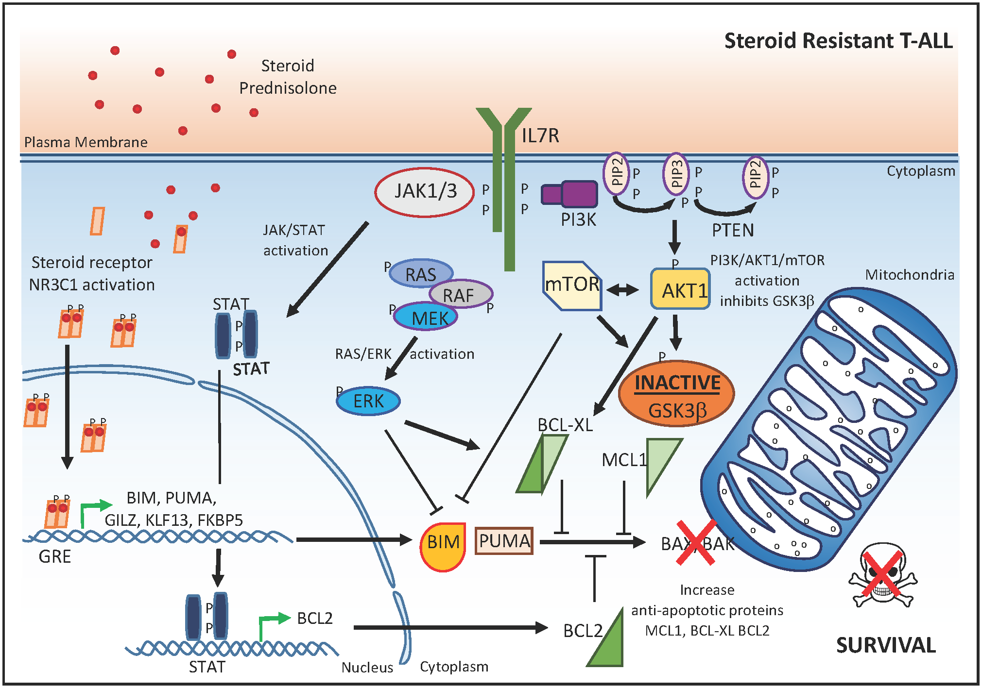 Molecular mechanisms that drive glucocorticoid resistance in T-ALL.