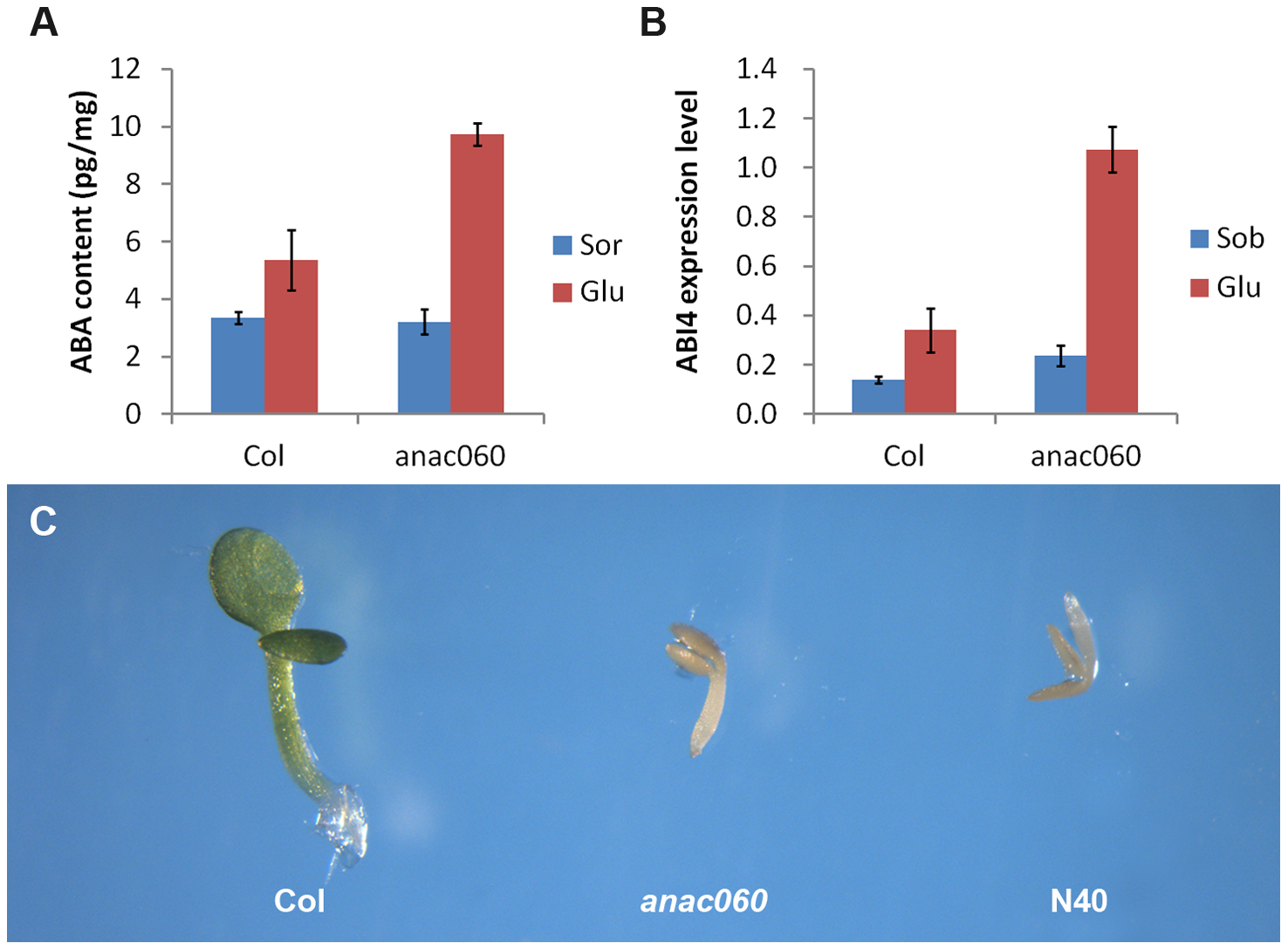 <i>ANAC060</i> attenuates Glc-induced ABA accumulation and ABA sensitivity.