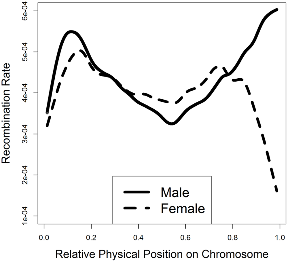 Smooth spline plotting of male and female recombination rates along a chromosome.