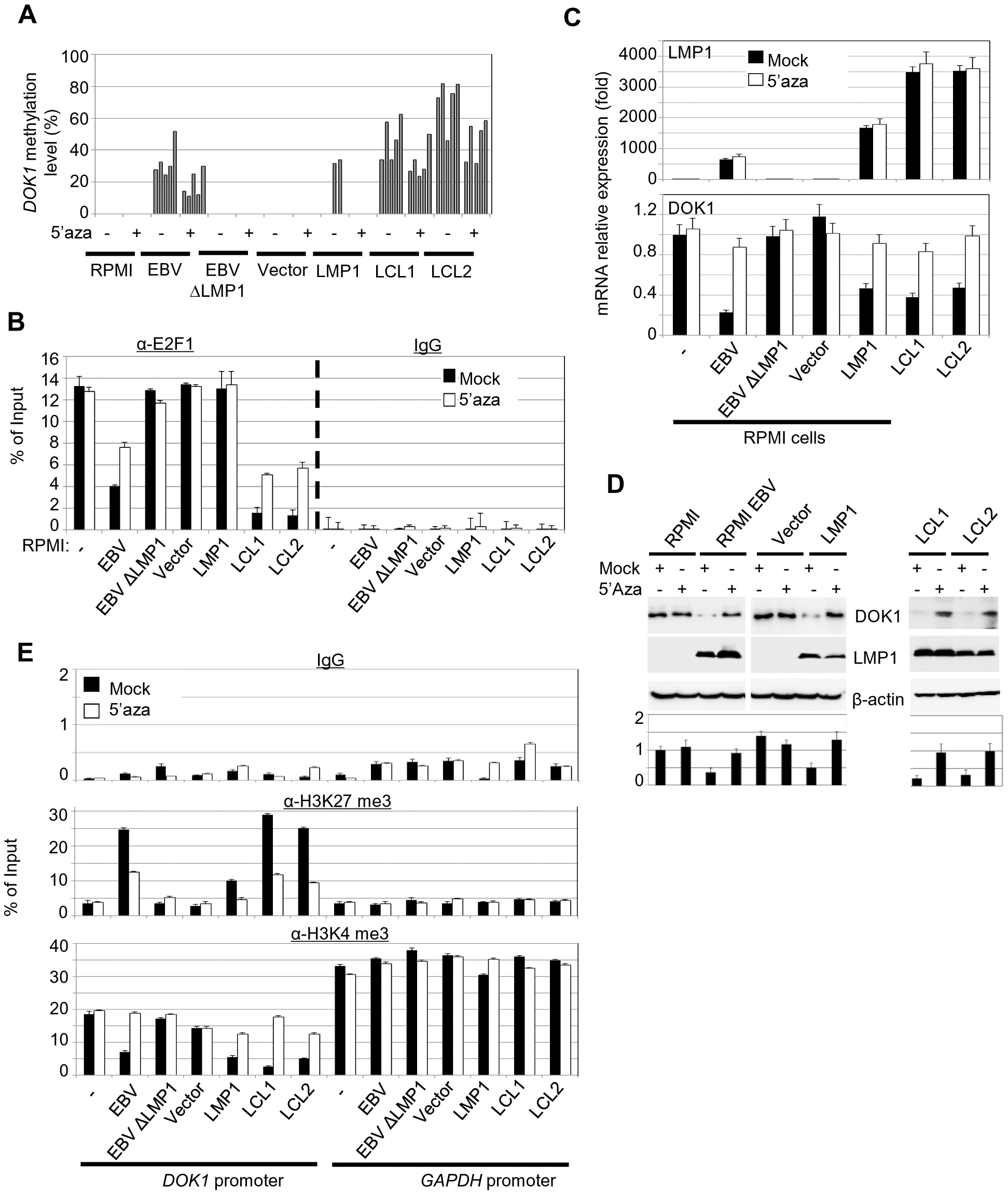 5-Aza treatment rescue <i>DOK1</i> expression in EBV infected cells.