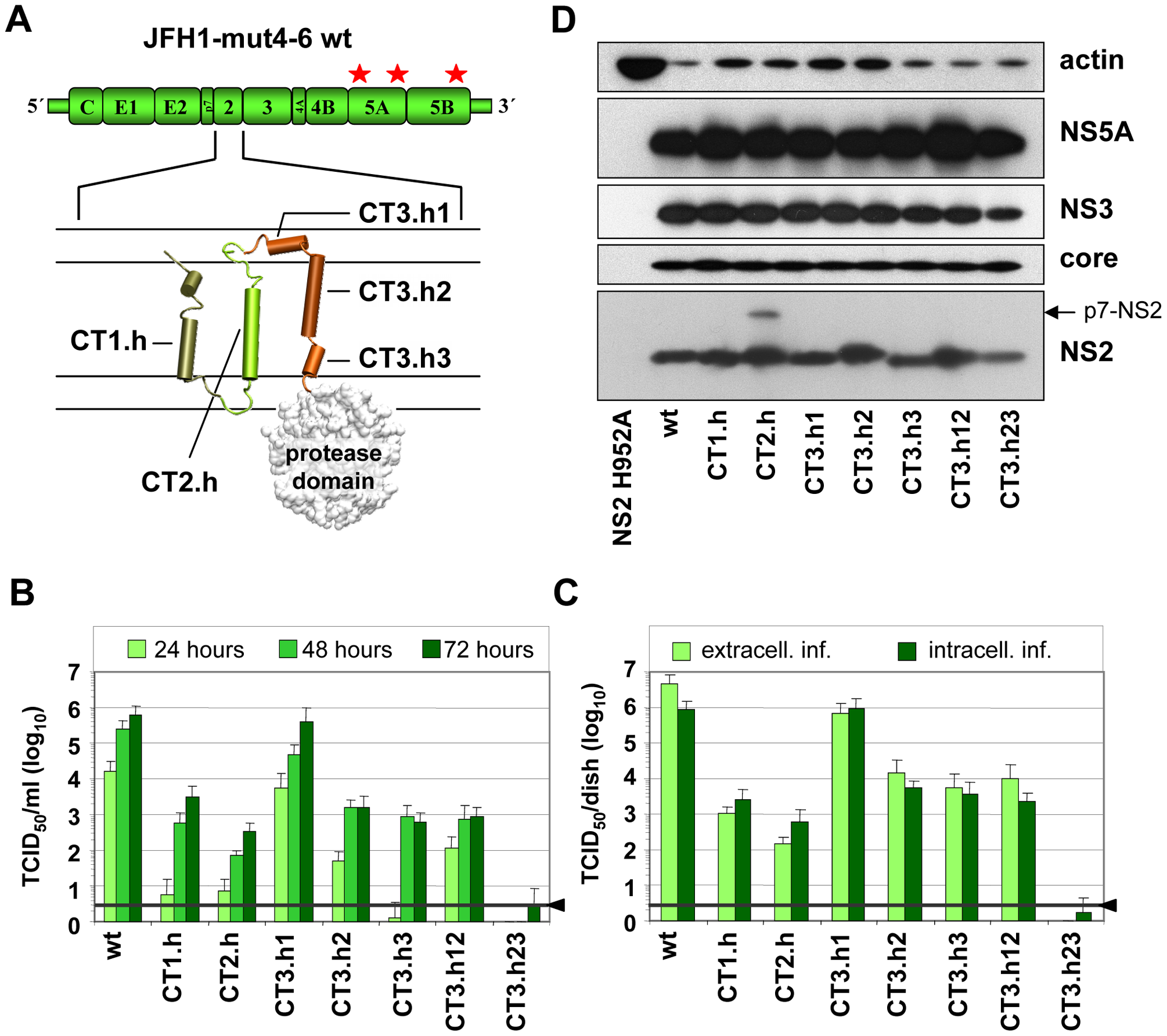 Exchange of helices within the NS2 membrane binding domain and impact on infectious HCV particle production.