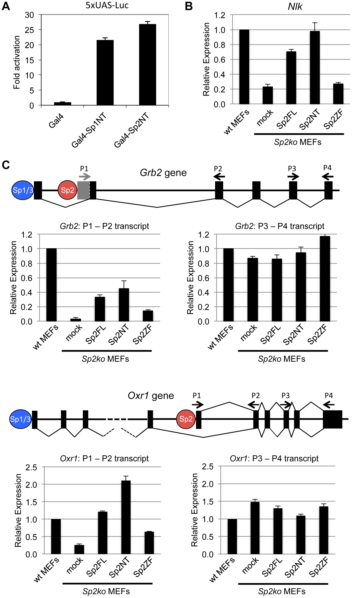 The N-terminal domain of Sp2 can rescue target gene expression.